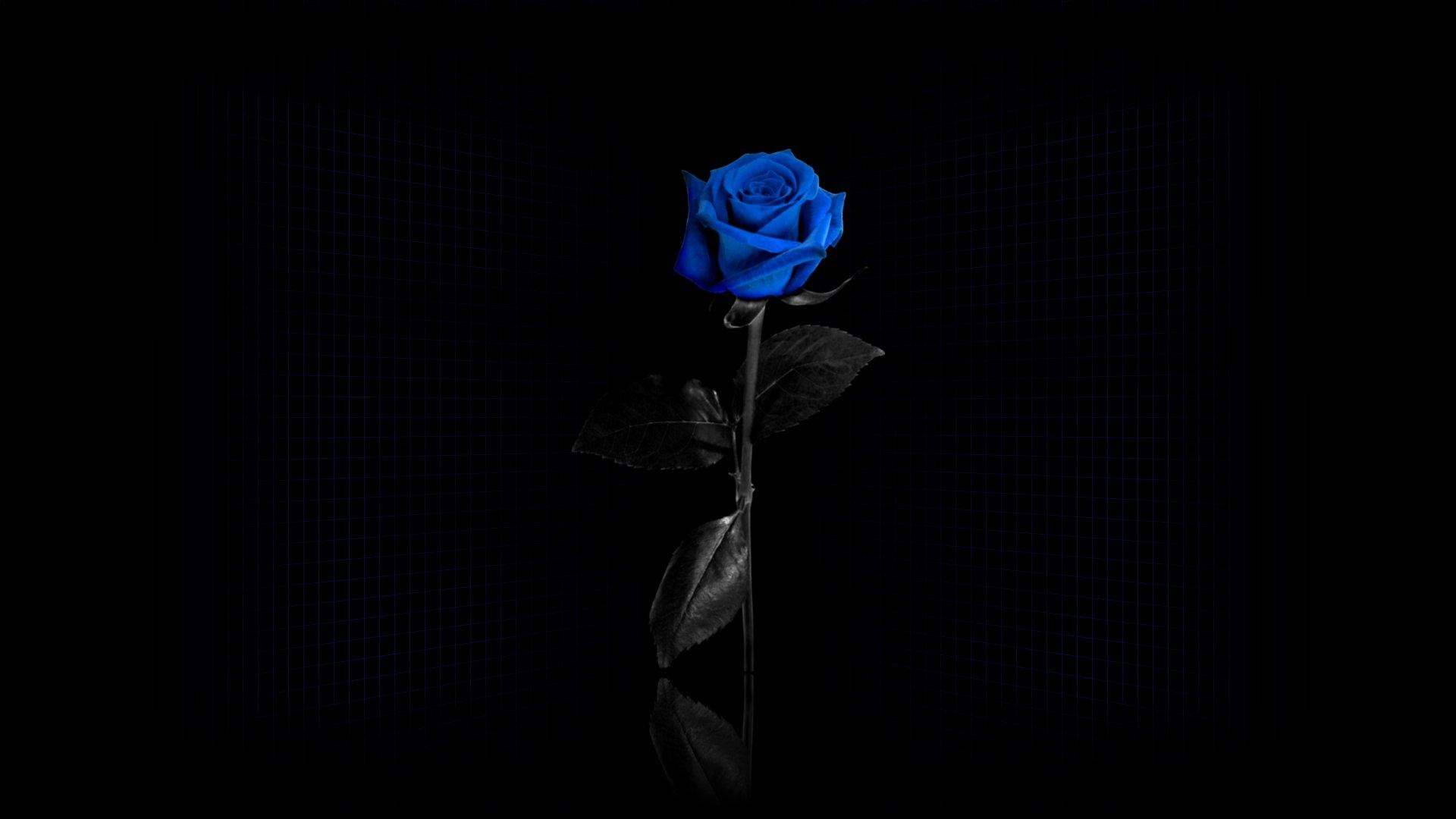 Картинки для рабочего стола розы на черном фоне