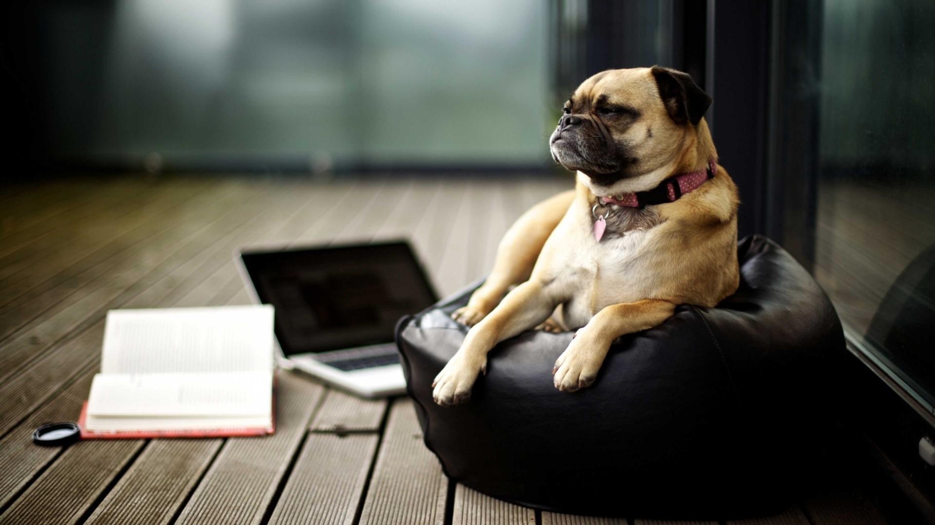 Black Books Dog Laptop Mac Book Pug Puppy Mammal Like