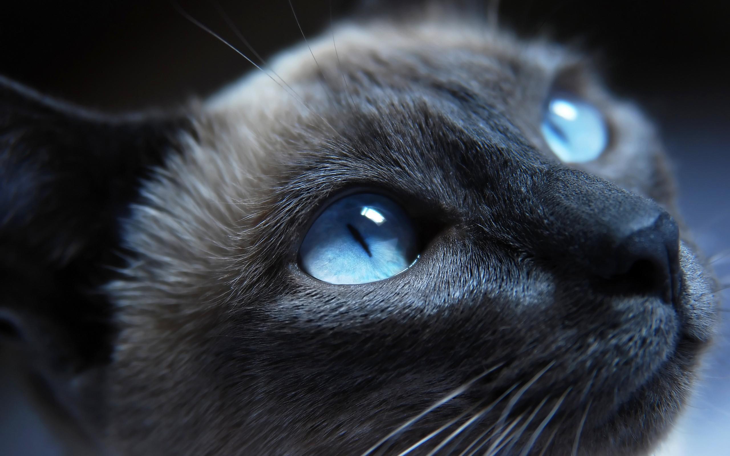 cat repellent sensor
