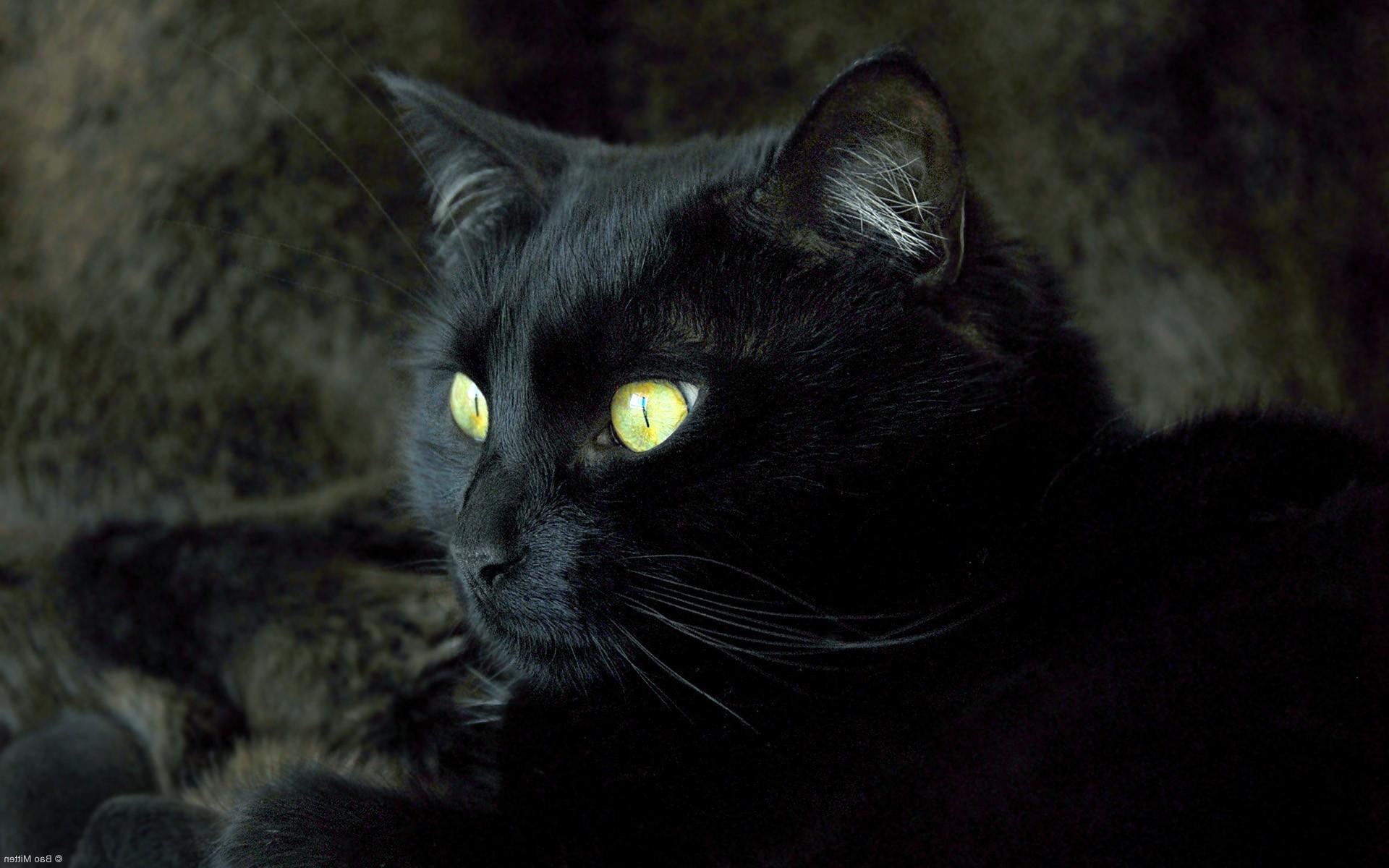 обои на рабочий стол черная кошка с зелеными глазами № 174189 без смс