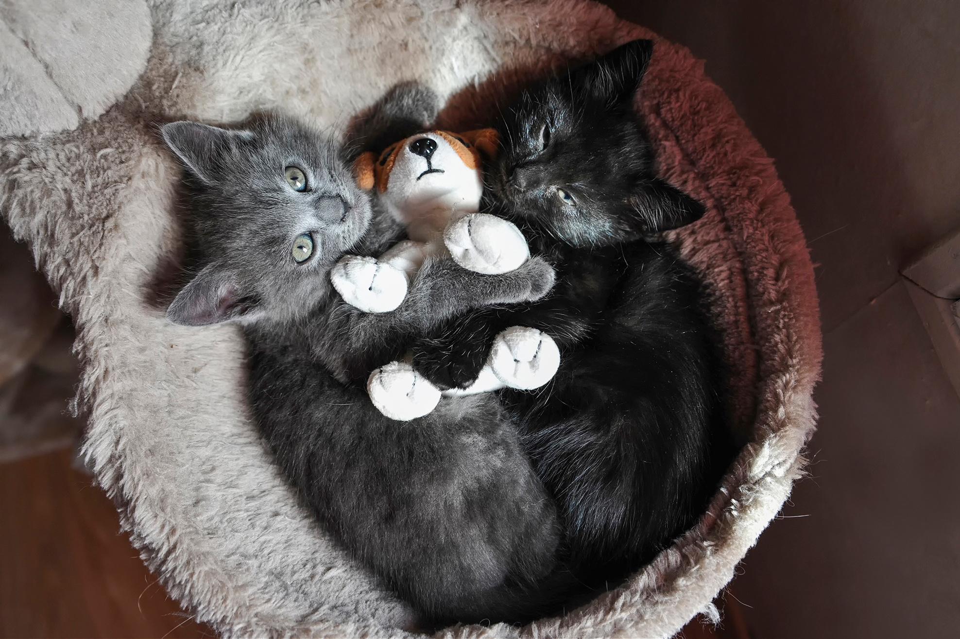 коты с игрушками фото вещь духи про