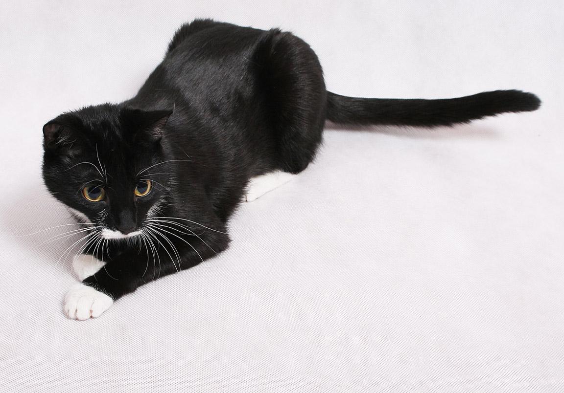fotky zdarma velké černé kočičky