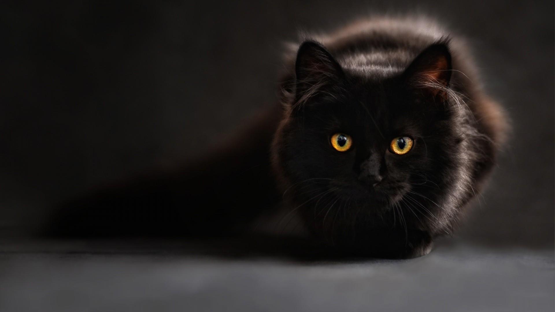 černá kočička tapeta
