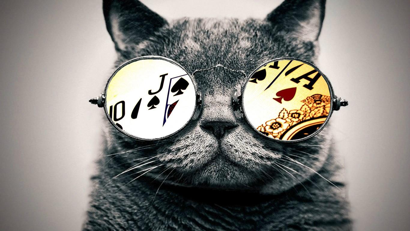 Cat Sized Glasses