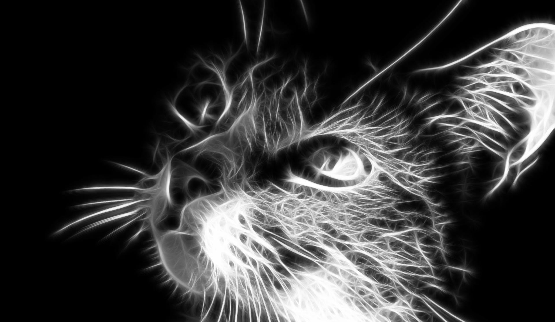 zdarma dobrá černá kočička oholil kočička malé kozy