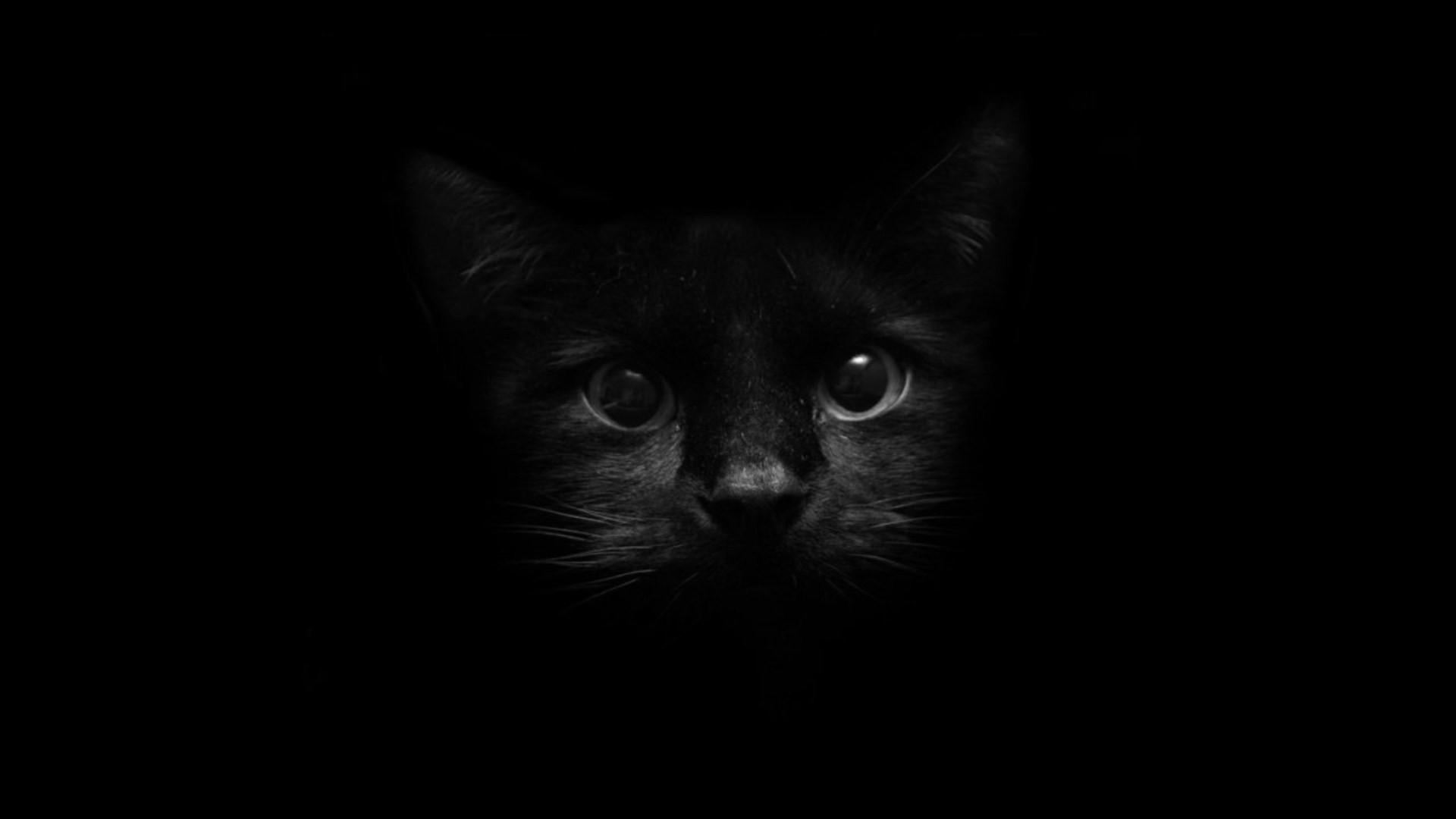 обои на рабочий стол черный кот на черном фоне № 204174 бесплатно