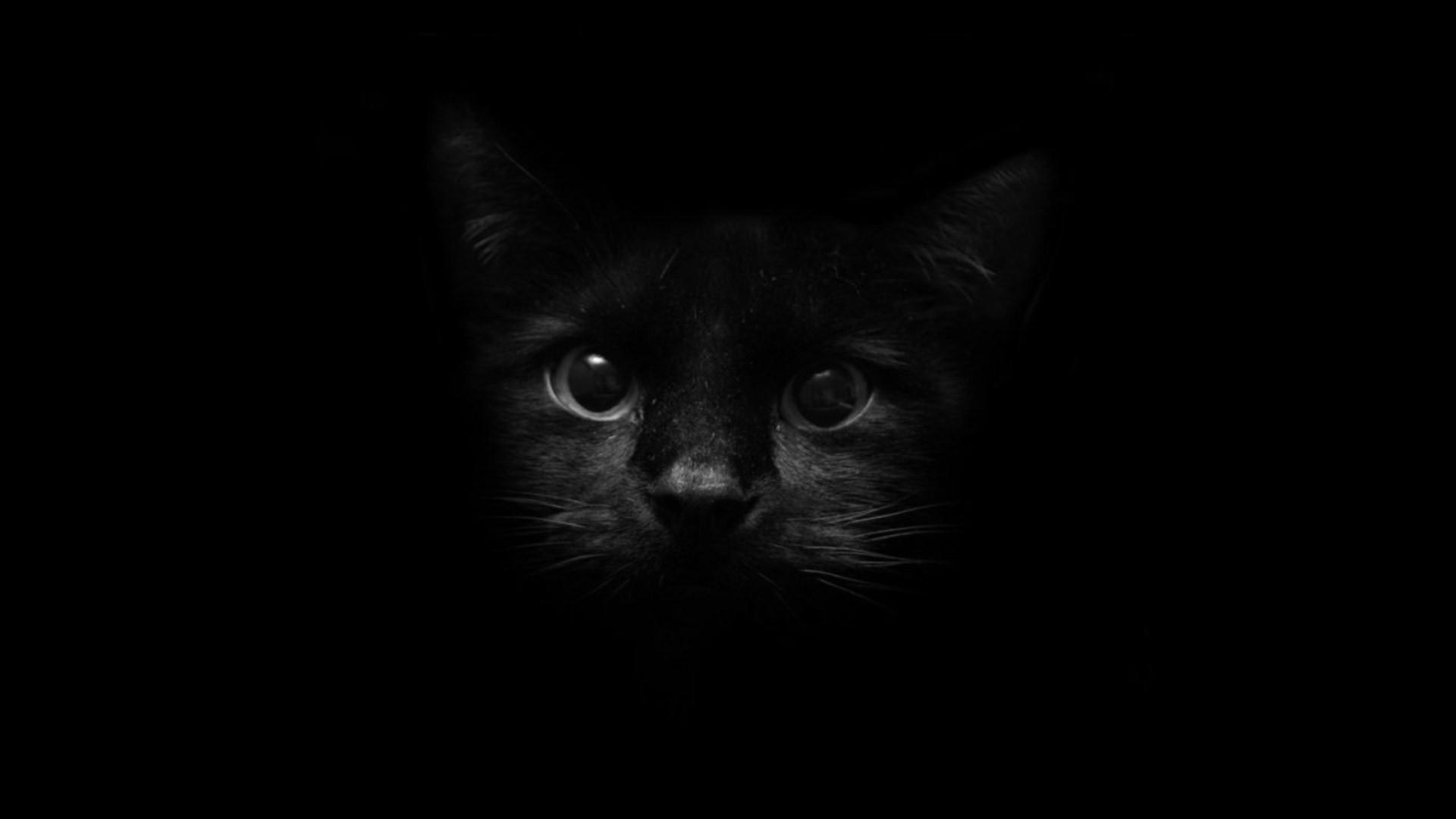 брак кот во тьме картинки было все пьянки