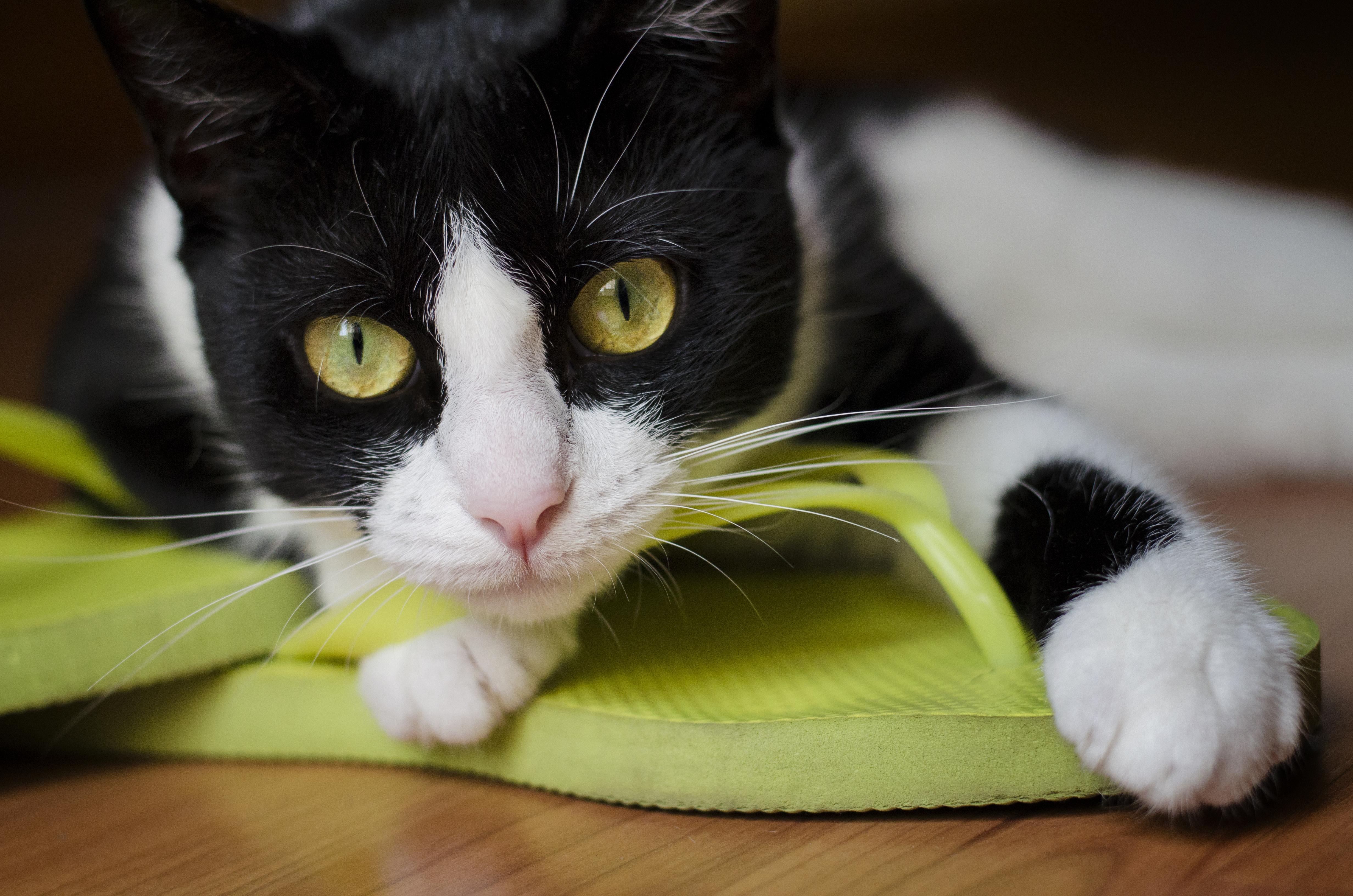 Sinsay - Kosmetická taštička s motivem kočky - Černý.