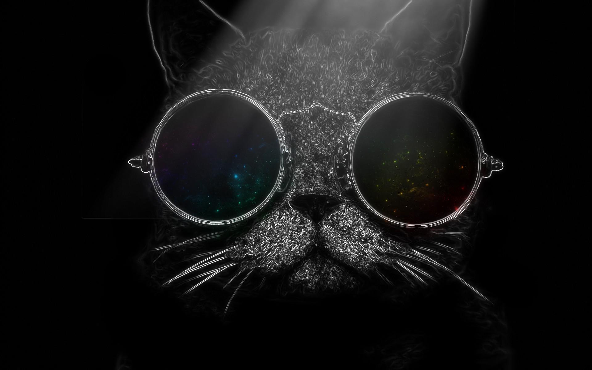 Papel de parede : gato, oculos de sol, óculos, nariz, olho ...