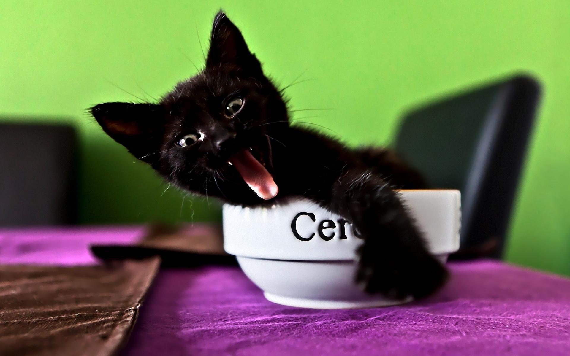 Для, картинки смешных котов черных