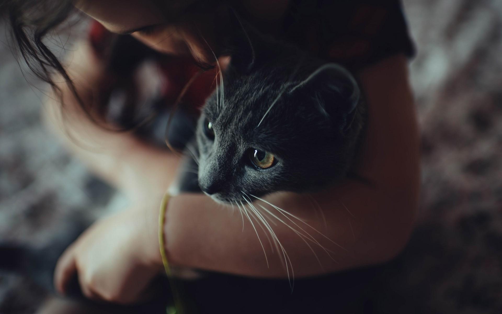 Анимационная картинка кошка с расческой уссурийску, продажа