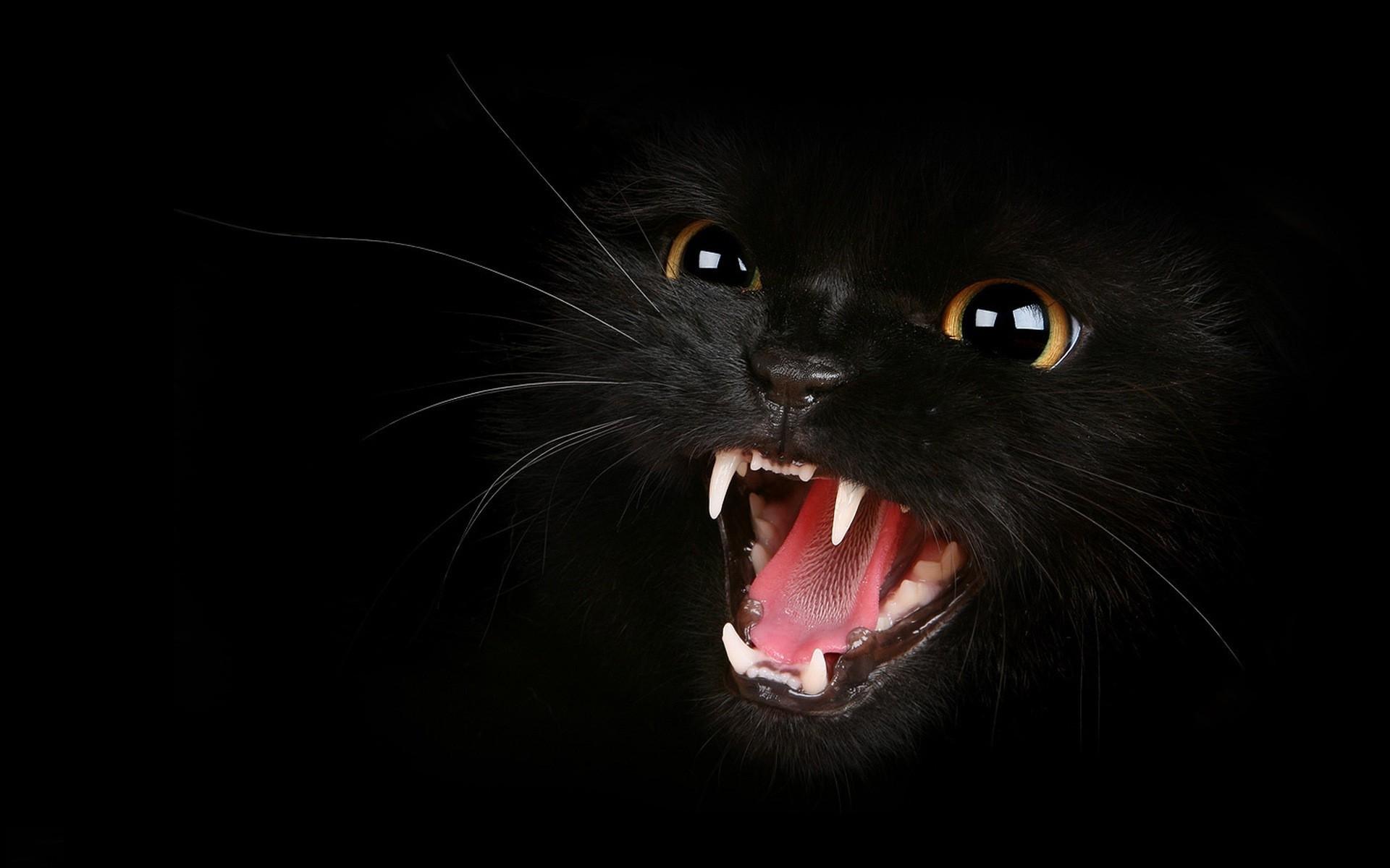 обои на рабочий стол глаза кошки на темном фоне № 237977 бесплатно