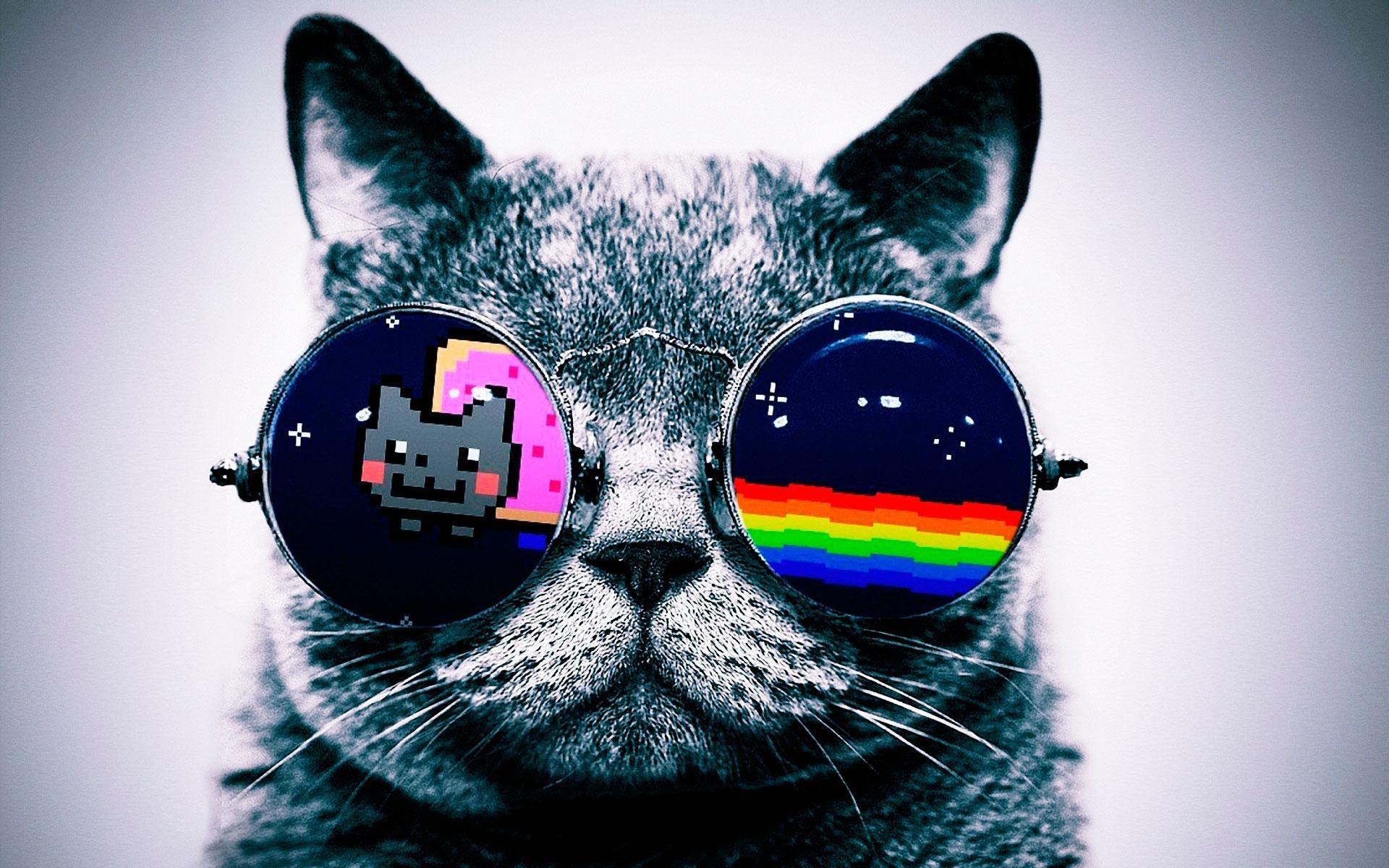 Caht Lunette Nyan Cat