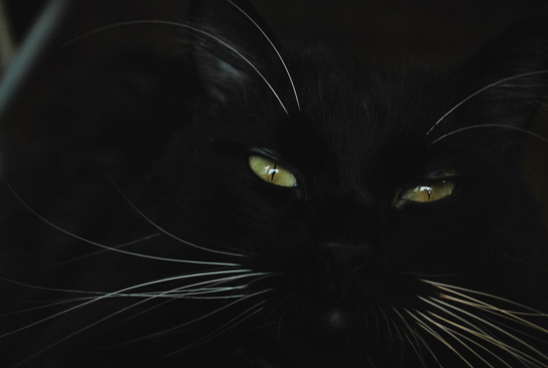 Hintergrundbilder Schwarz Illustration Einfarbig Batman Pelz