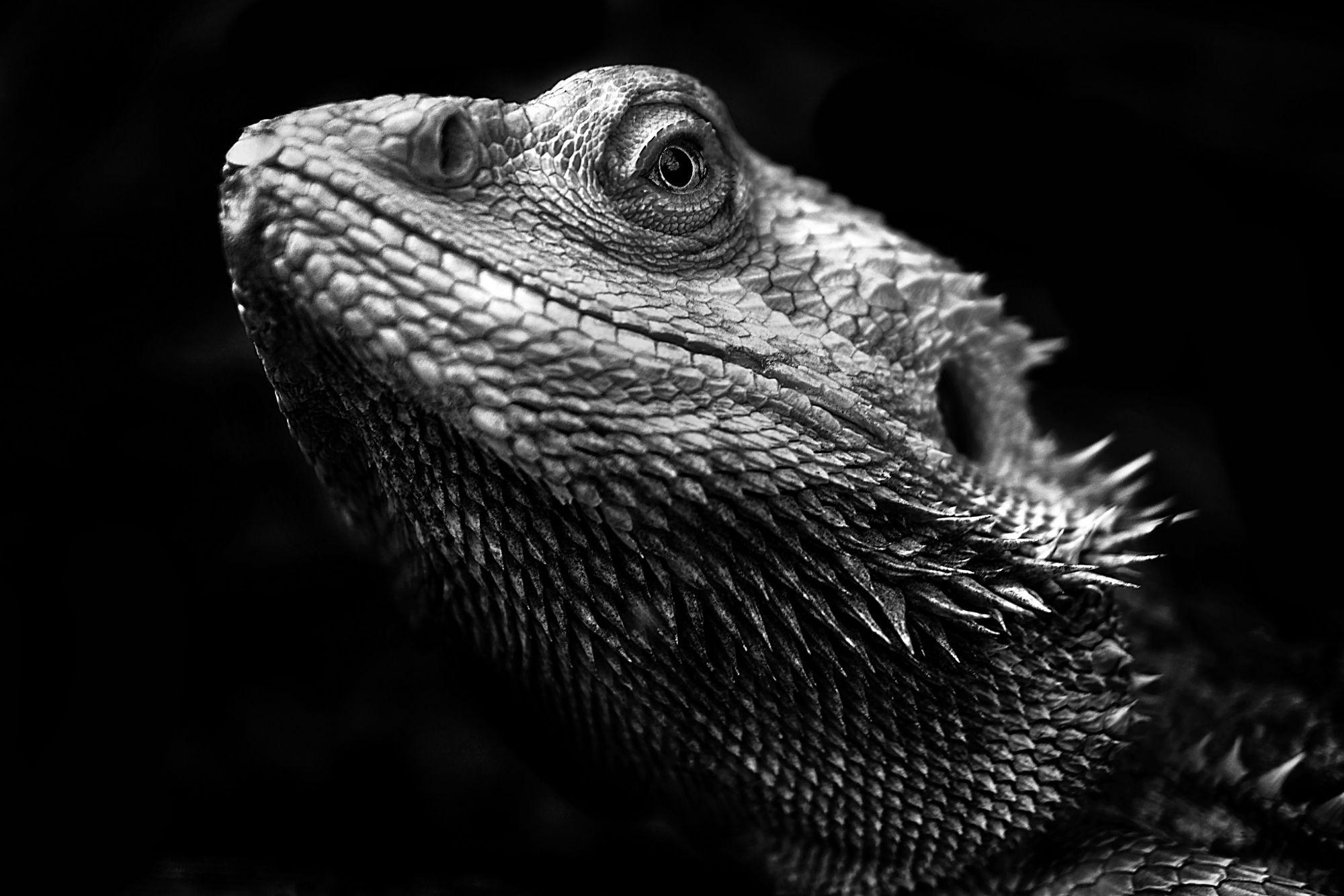 Sfondi monocromo buio natura camaleonti becco for Sfondi hd bianco e nero