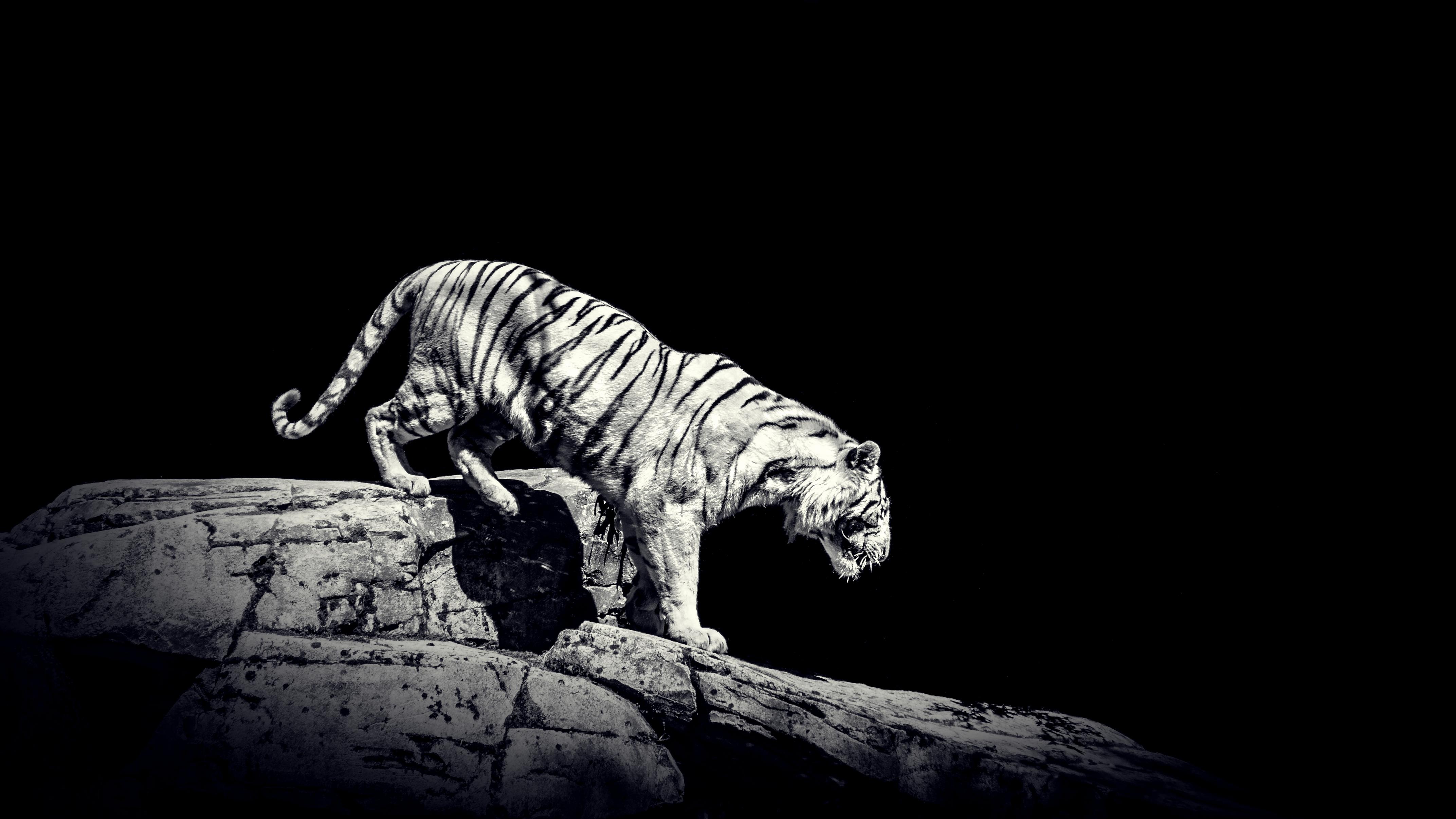 41+ Gambar hewan puma hitam putih terupdate