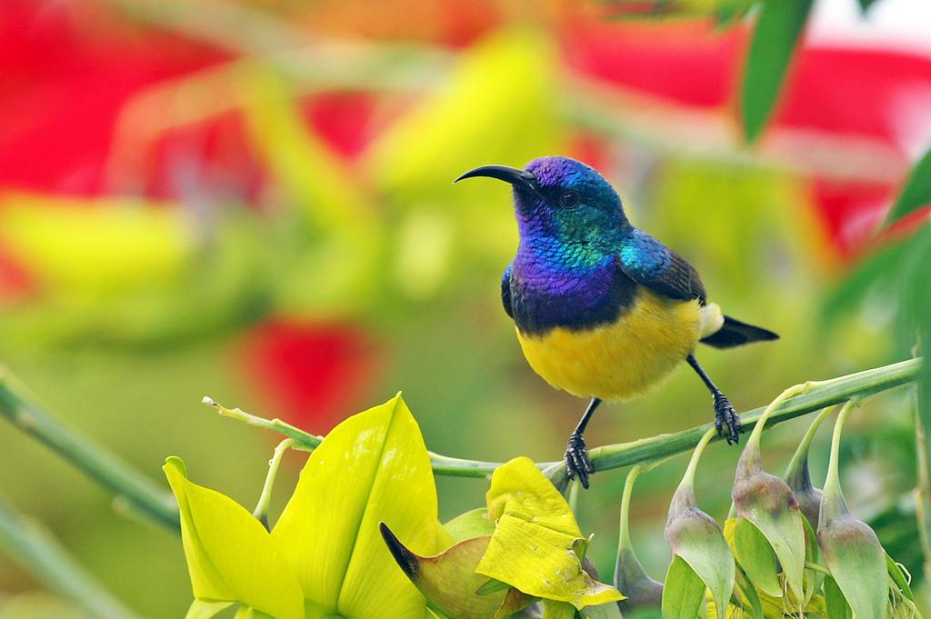 hintergrundbilder  schwarz natur lila grün gelb blau