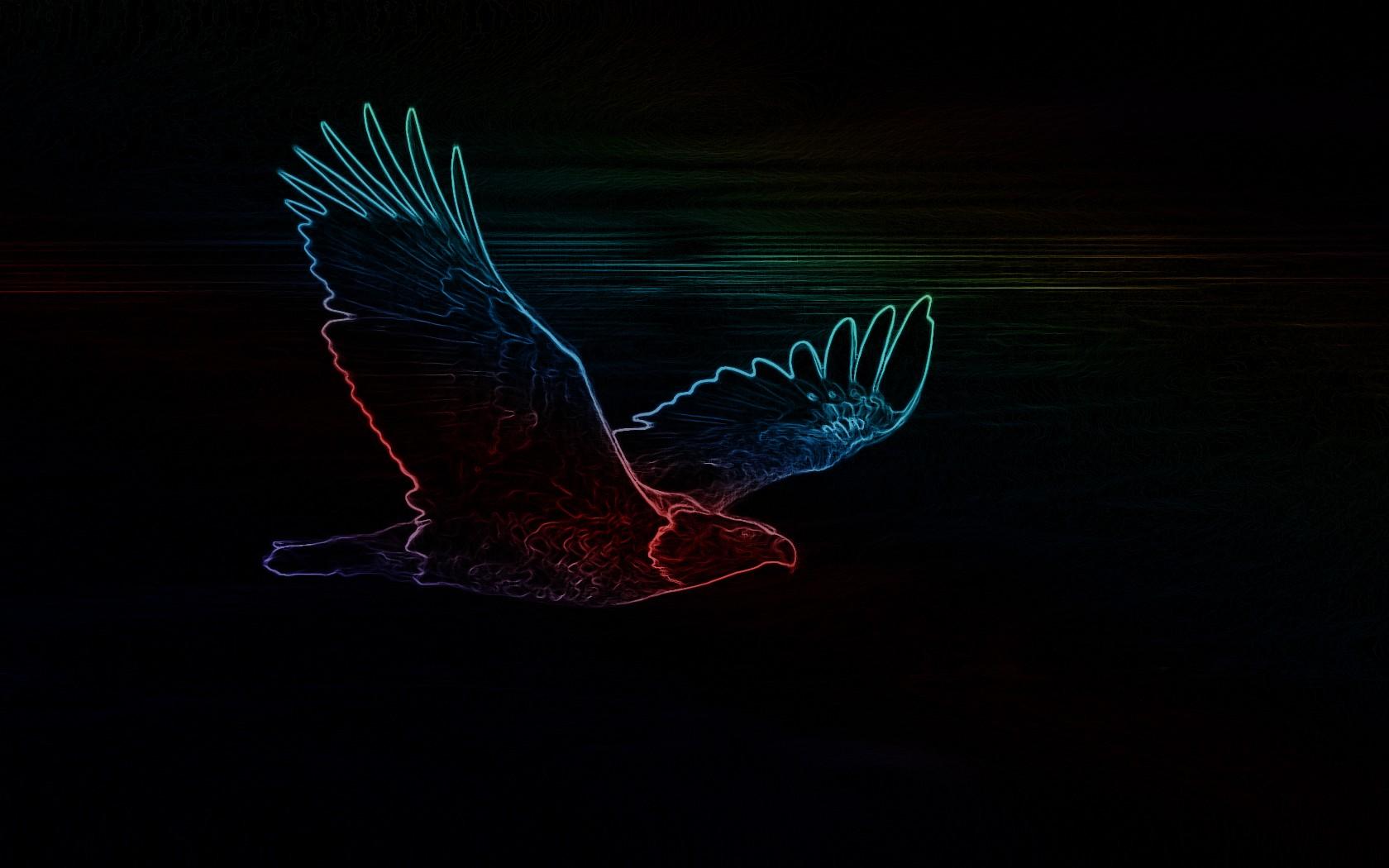 Wallpaper : black, night, neon, eagle, light, darkness, wing ...