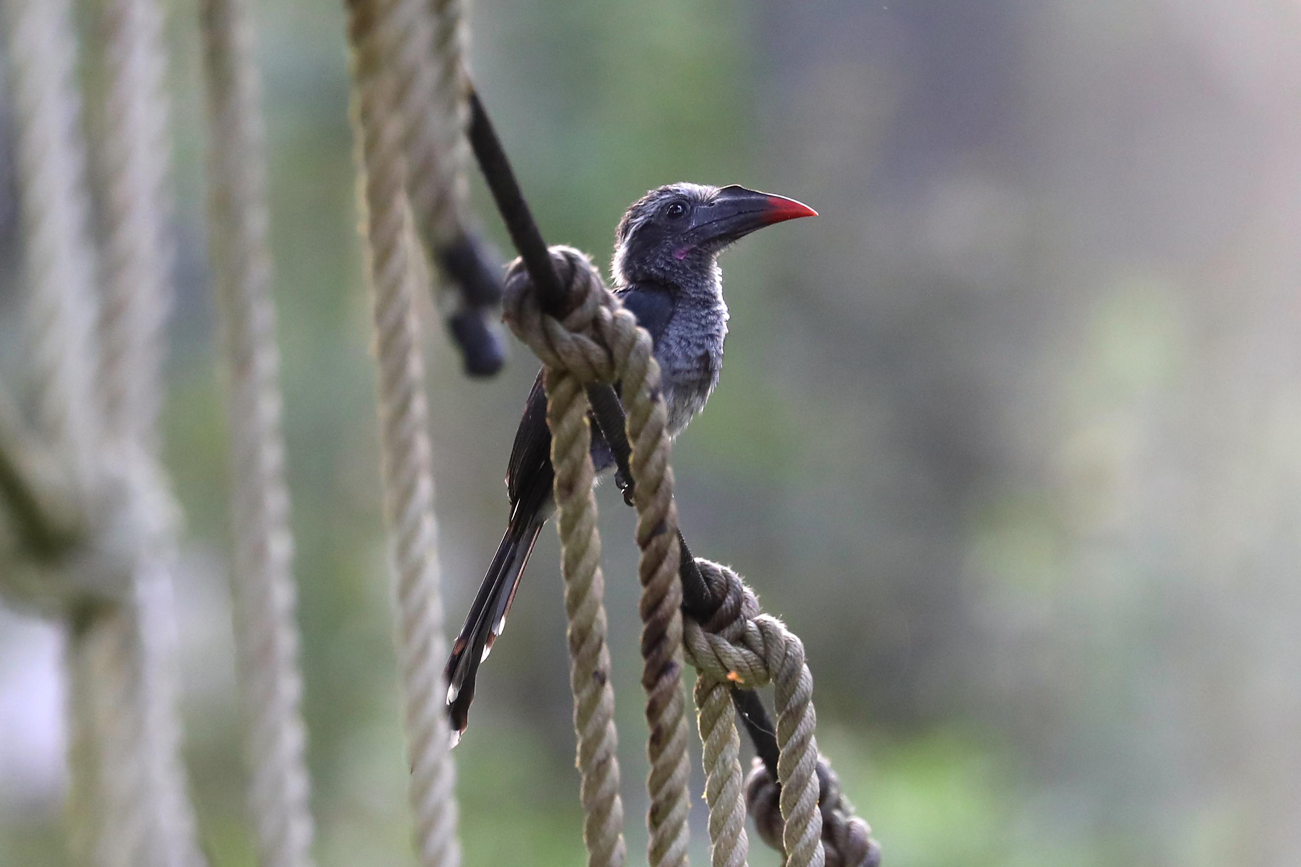 Černé africké ptáky