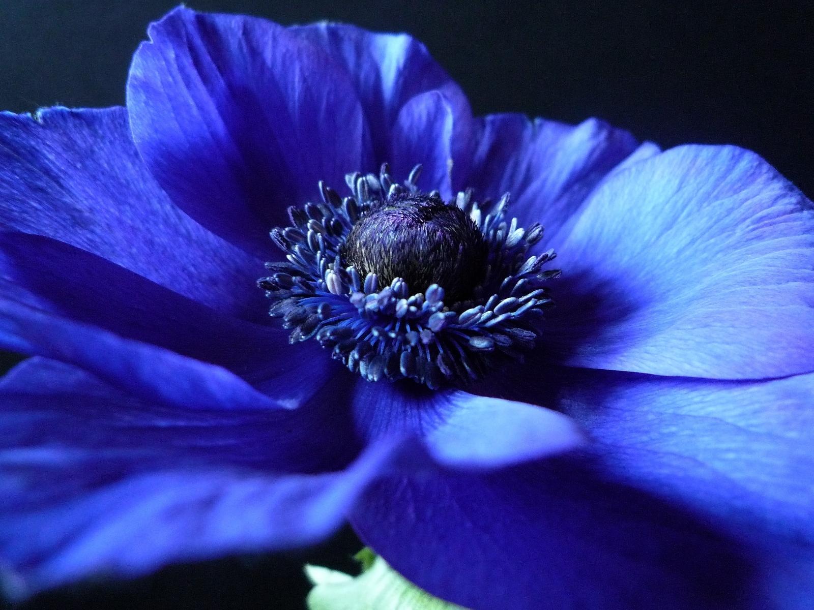 Картинки синий цветы