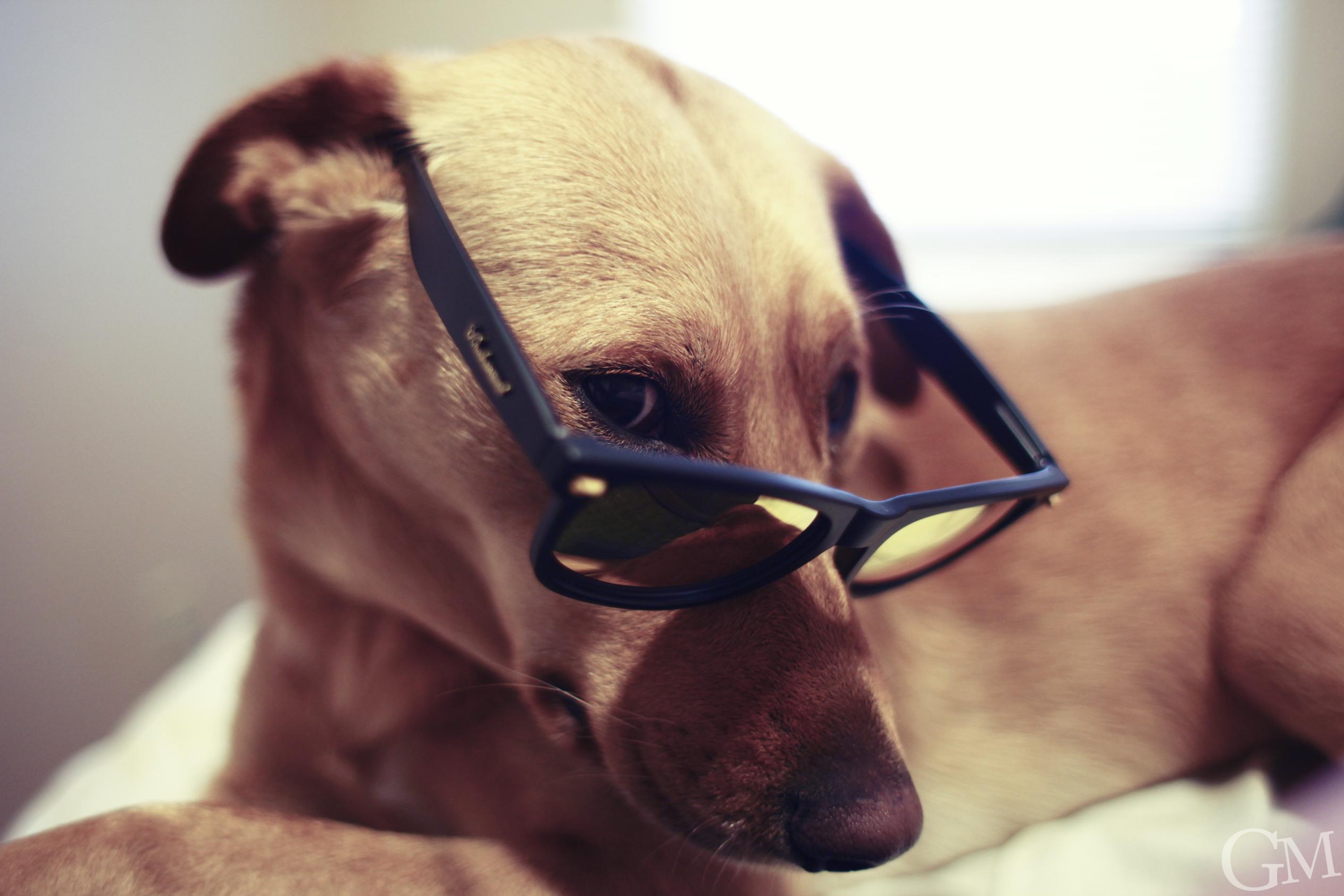 Fondos de pantalla : negro, Gafas de sol, gafas, perro, fotógrafo ...