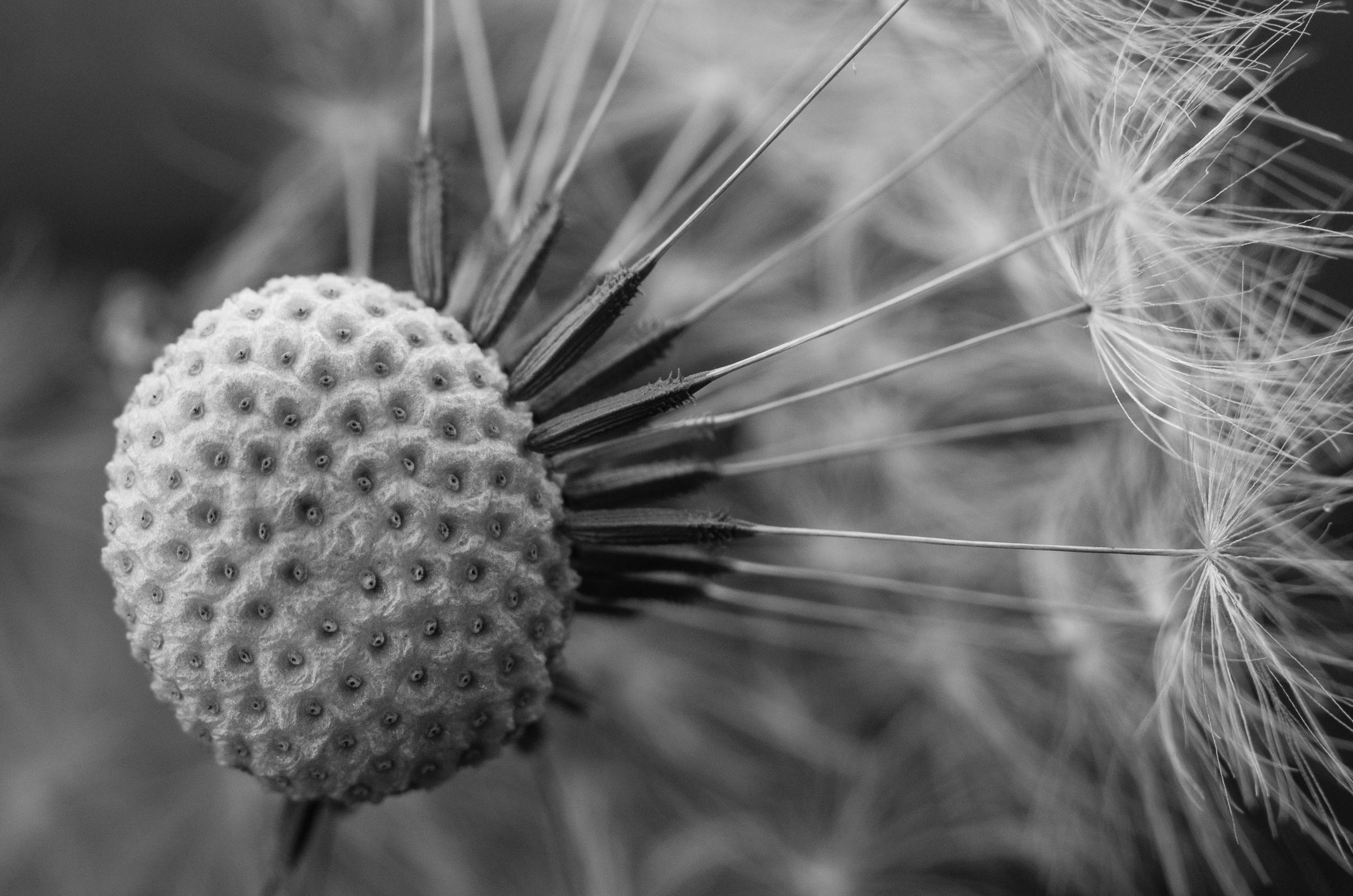 Fond D Ecran Noir Et Blanc Fleur Macro La Nature Monochrome