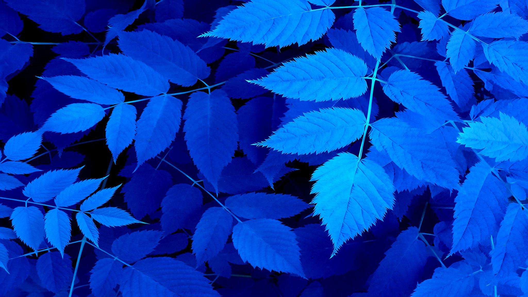 Fond Décran Bleu La Nature Feuilles Herbe 2048x1152