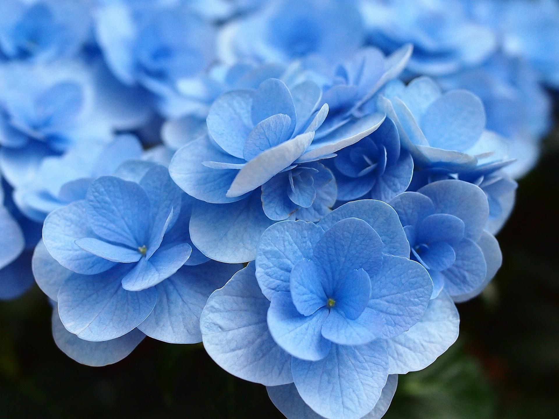 нём фотографии синих цветов профнастила это капитальная