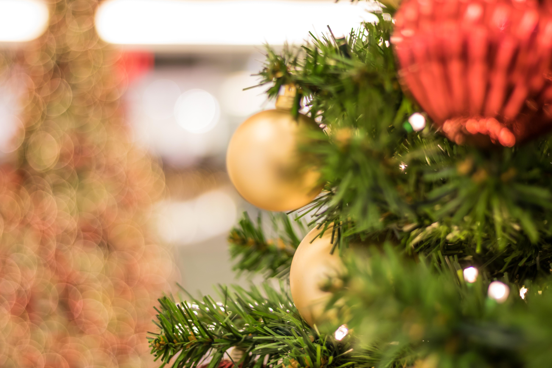 Weihnachtsbaum Ast.Hintergrundbilder Ast Deutschland Weihnachtsbaum Weihnachten