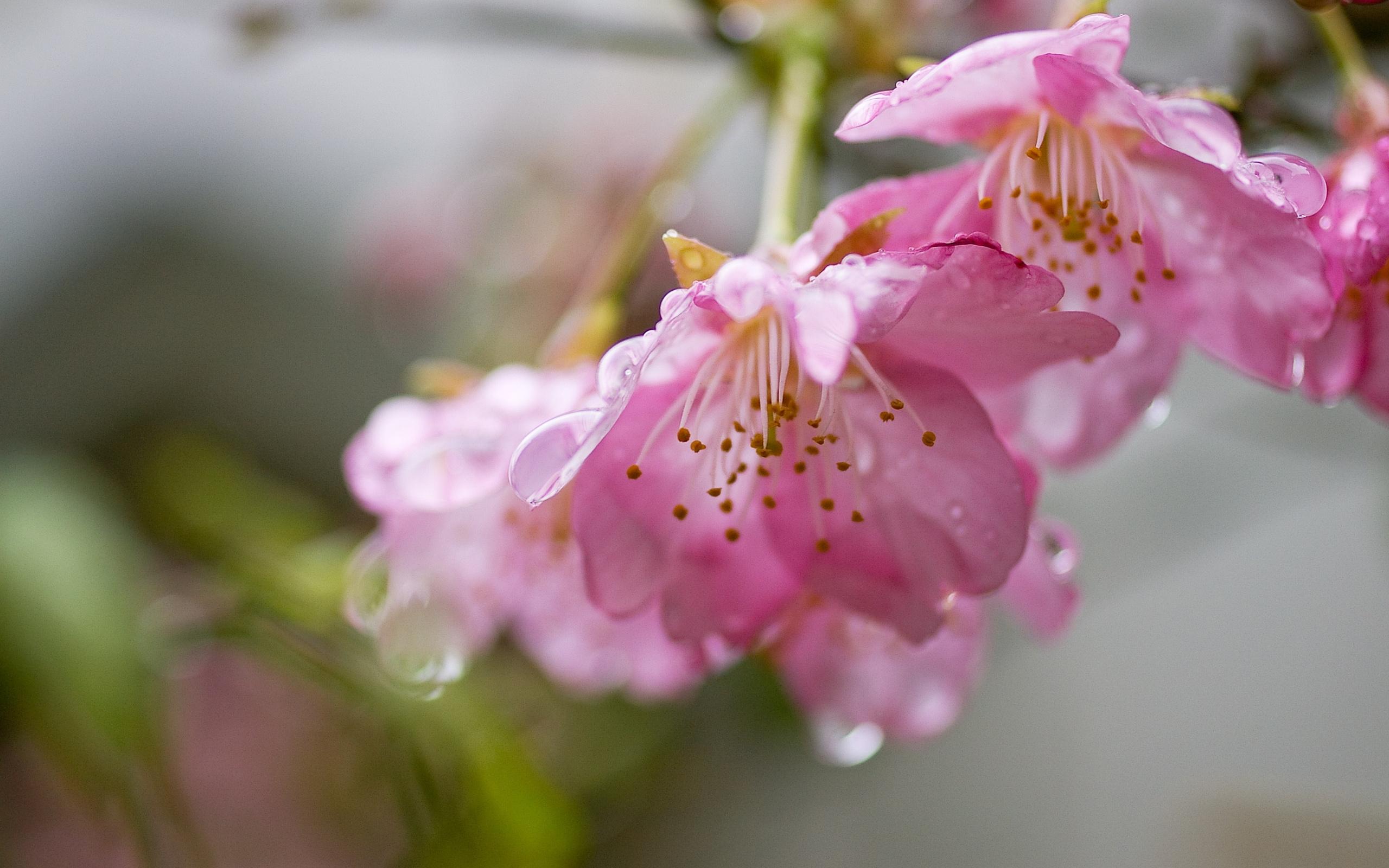 пережил весна картинки красивые розовые отлив