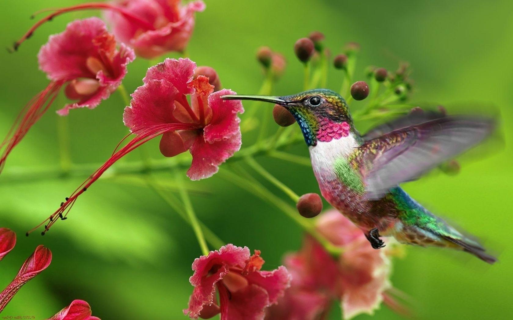 hintergrundbilder  ast swing kolibri blume pflanze