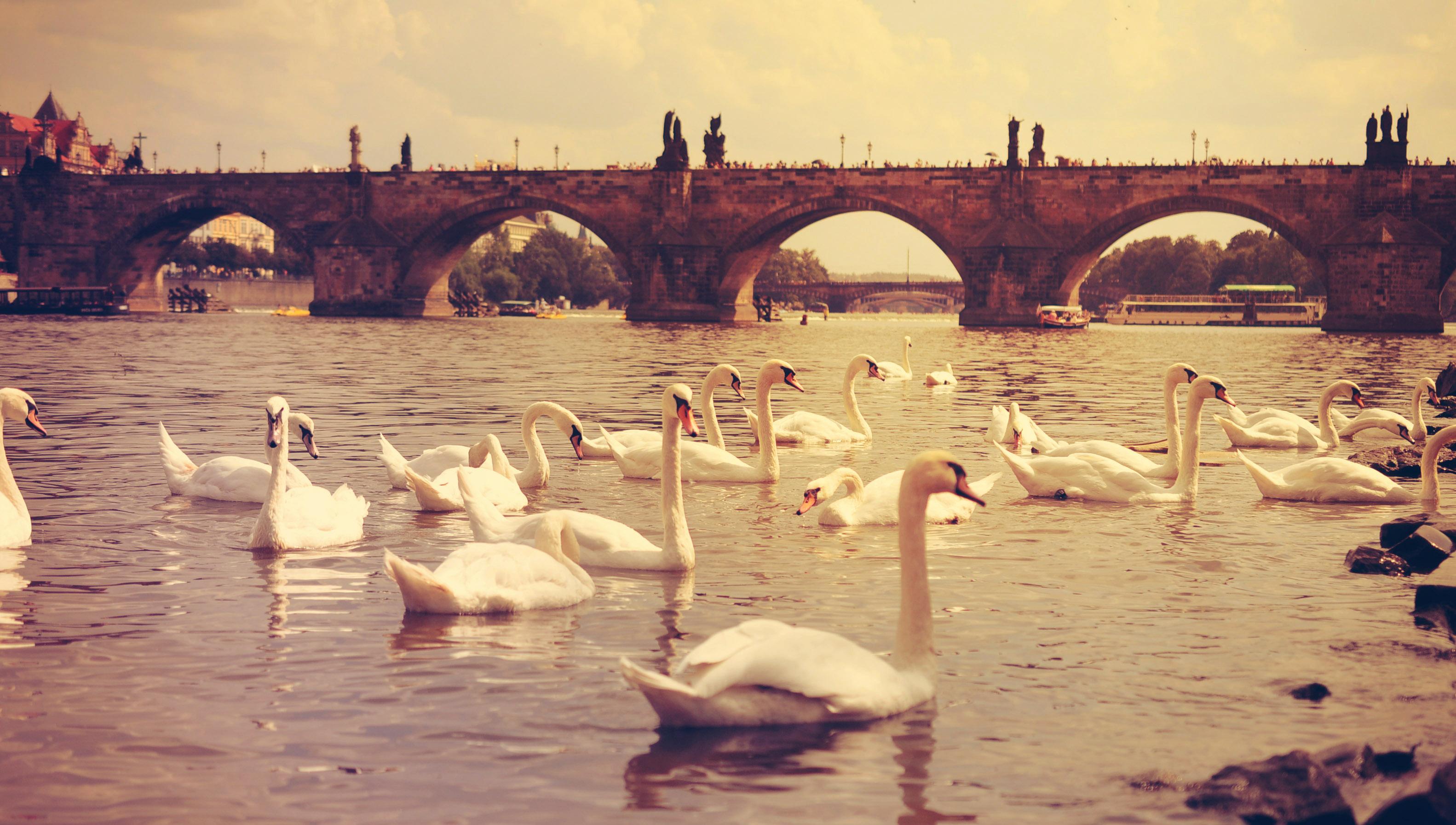 Обои Лебеди, чехия. Города foto 14