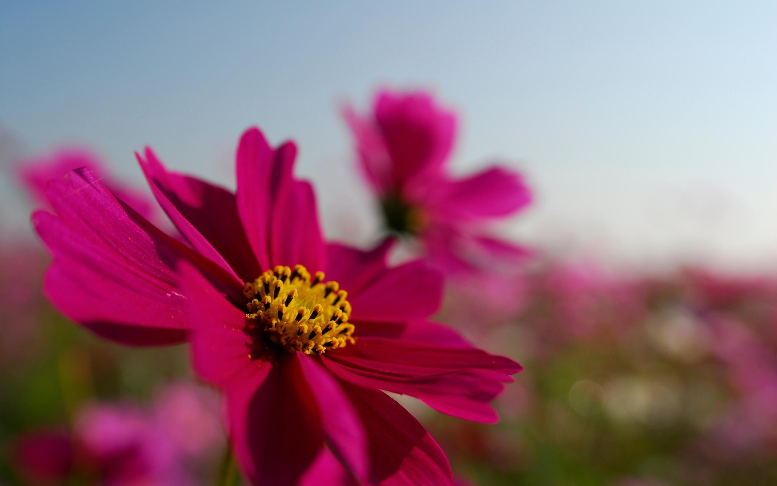 где хранить фото июль цветы на рабочий стол очень