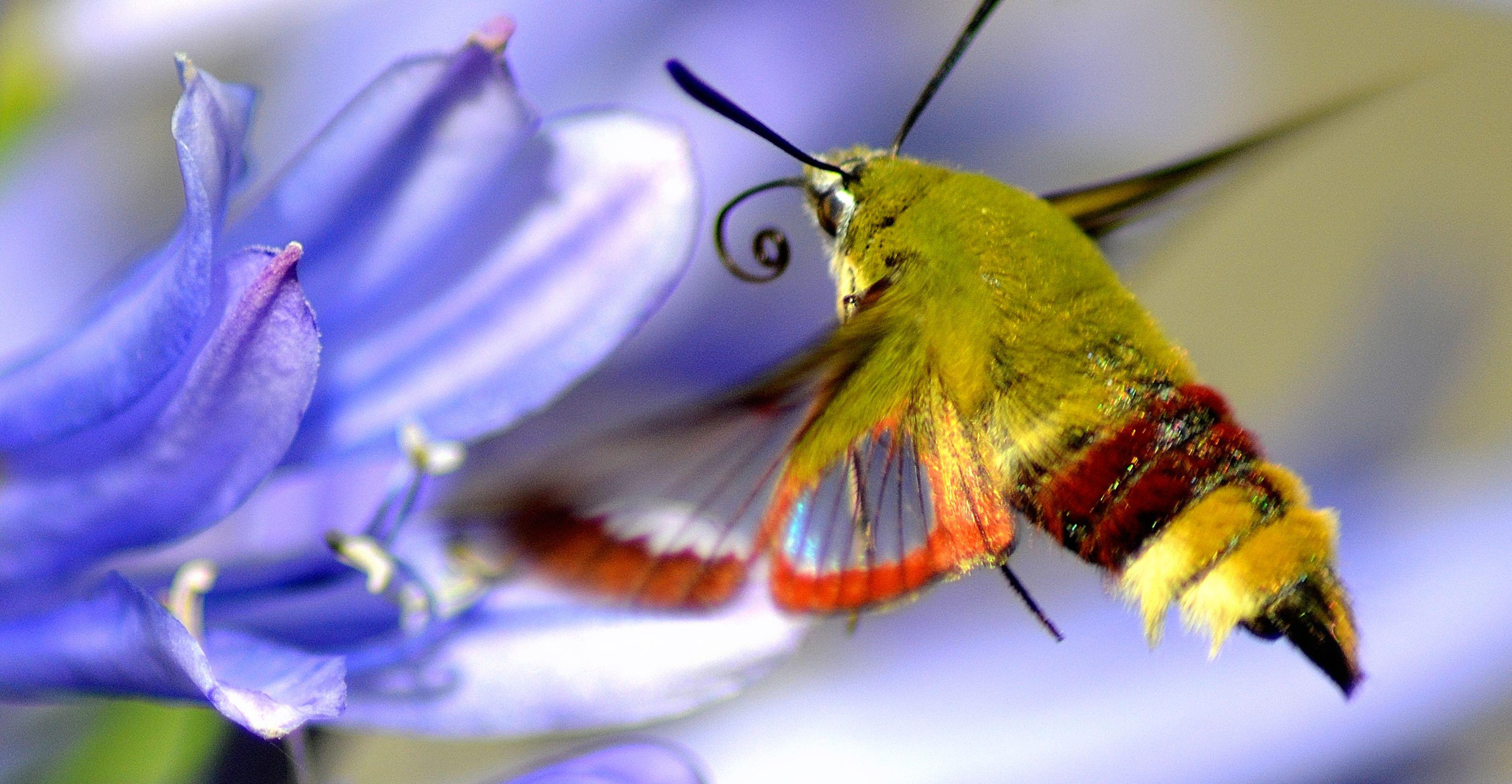 Insekten In Deutschland