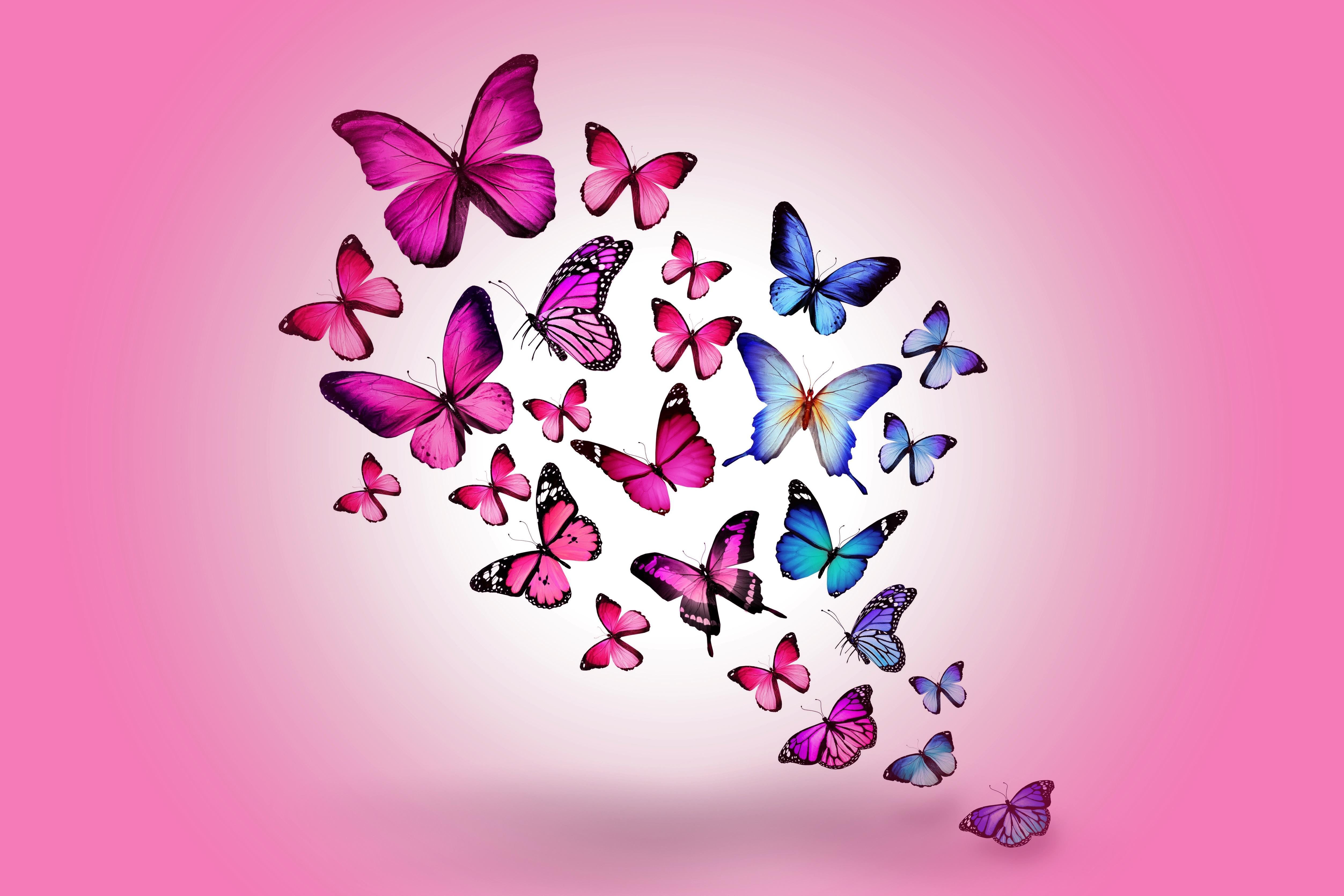 Sfondi Farfalla Disegno Volante Colorato Sfondo Rosa