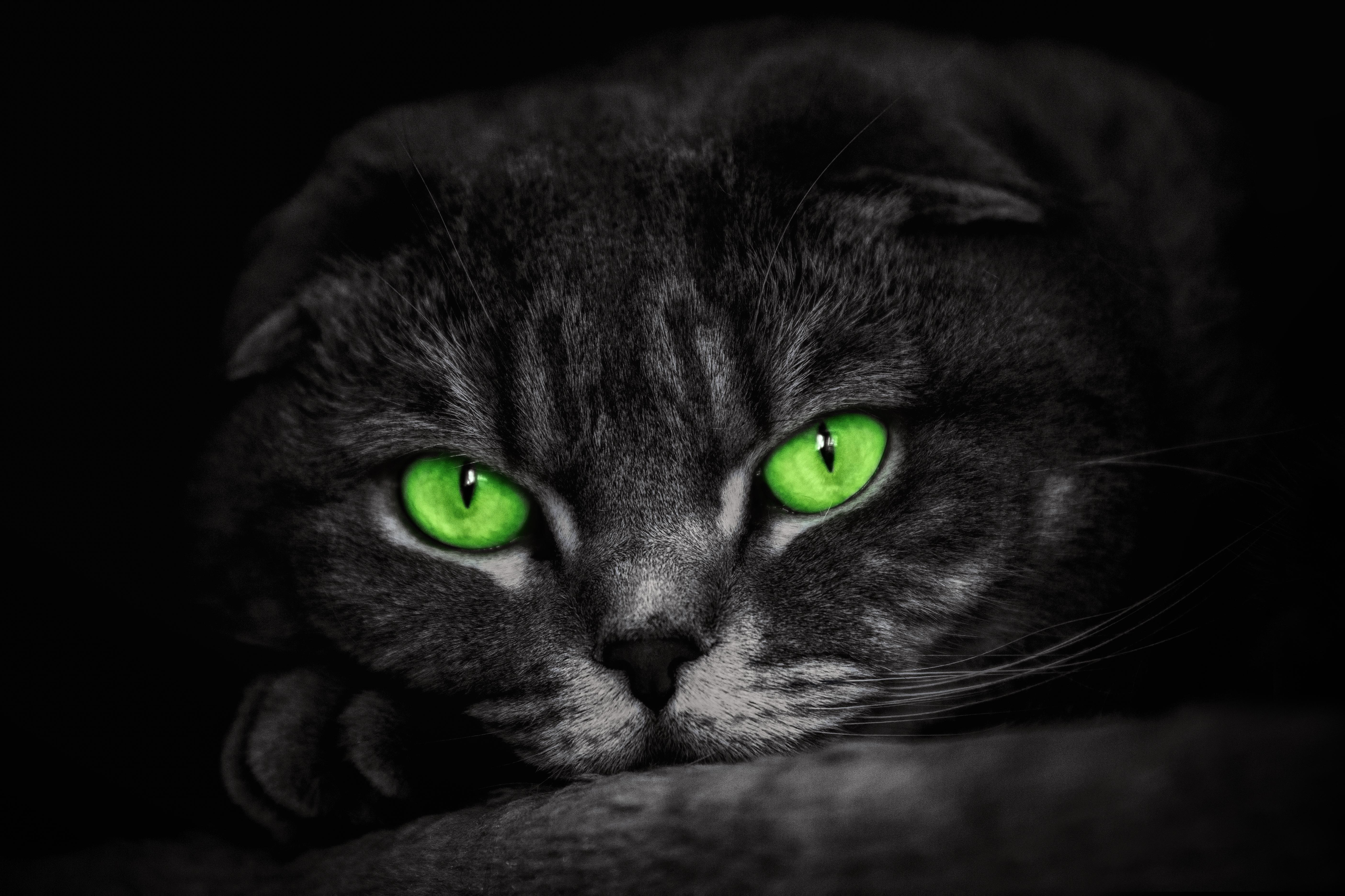 Черный кот с зелеными глазами картинка