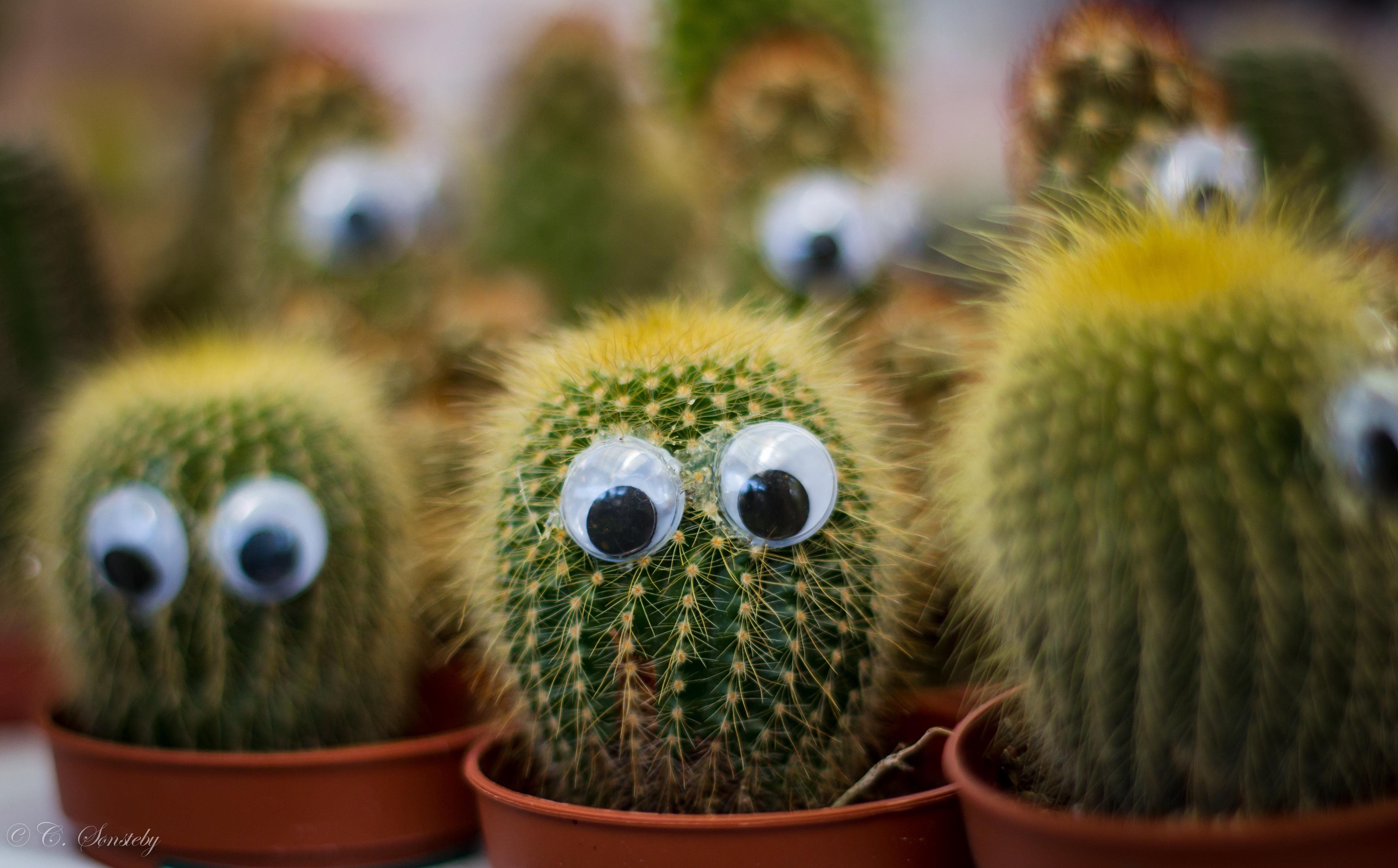 фото кактус смешной картинки электрический шипорез популярных