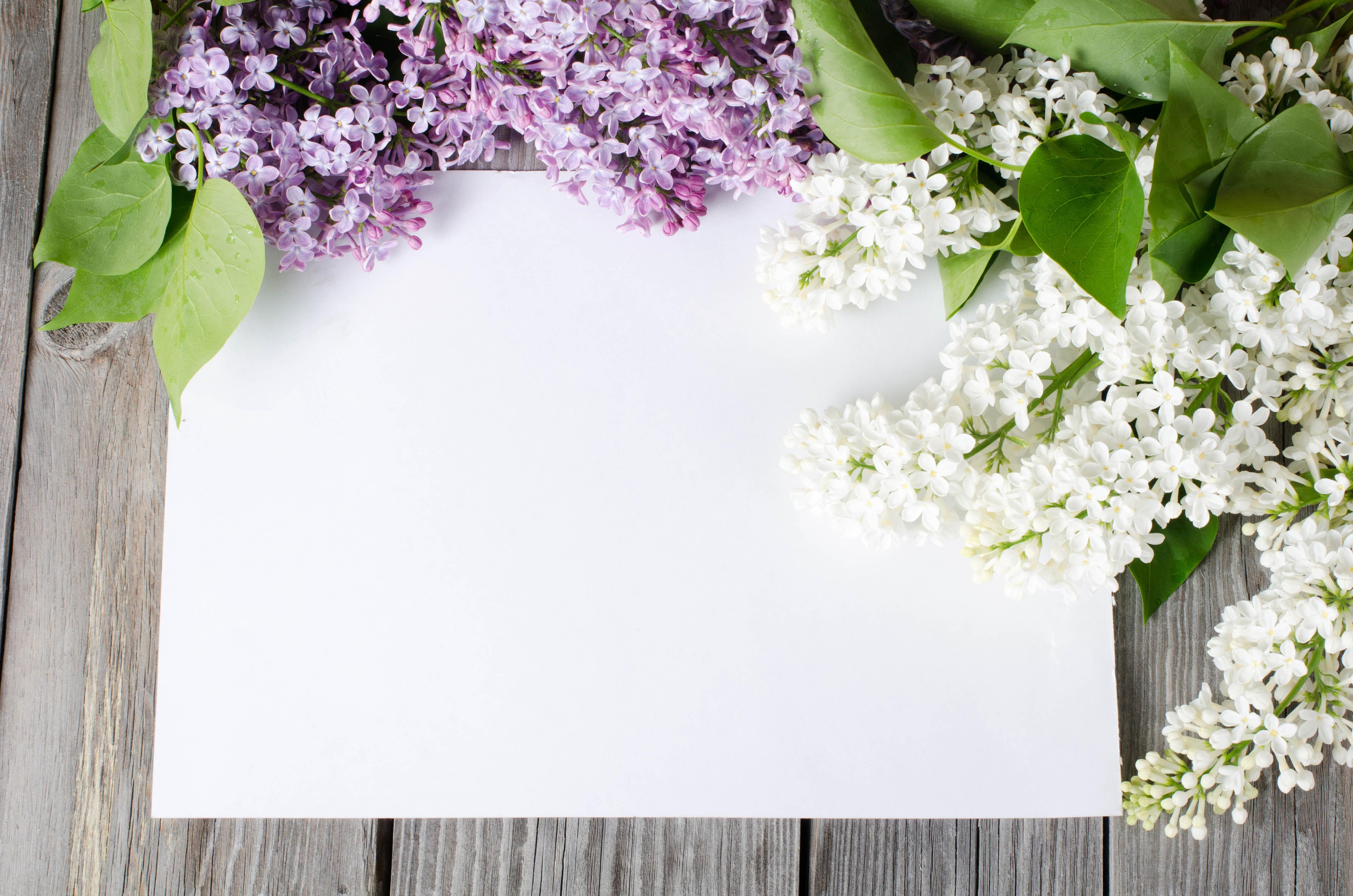 белый лист с цветами картинки