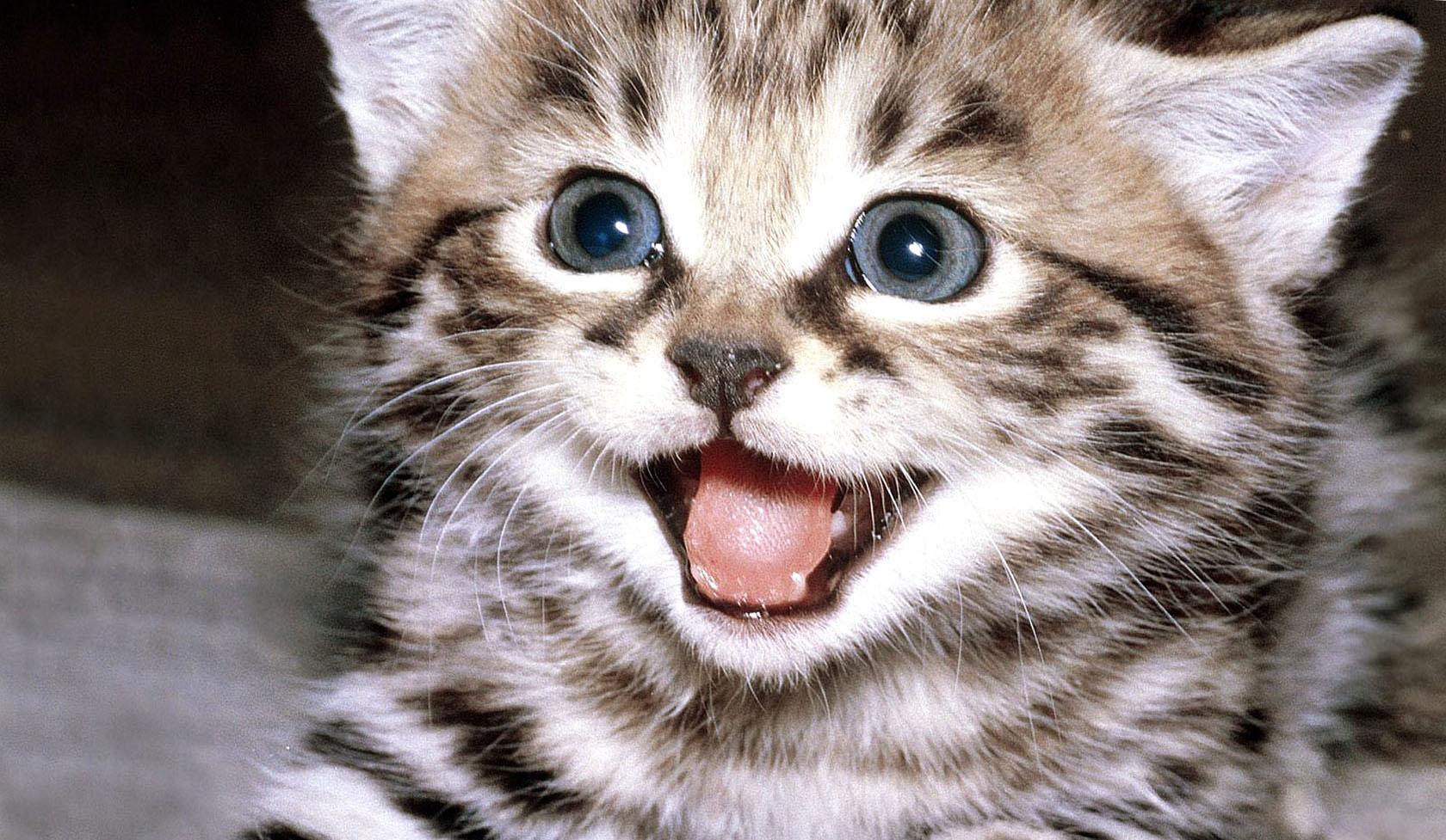 Улыбайся кошка картинки
