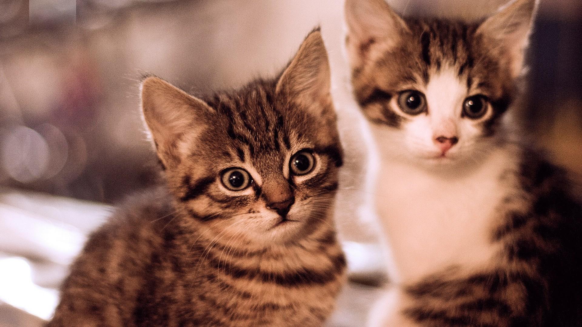 ázsiai szex cica kedves szopás