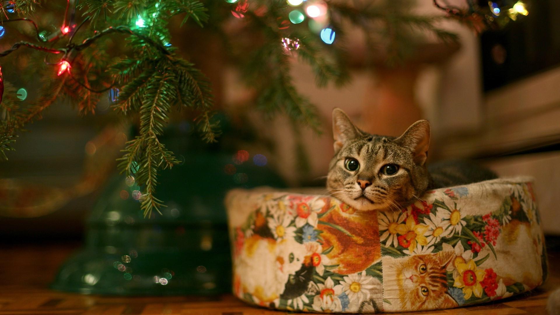 Fond D écran Vacances De Noël: Fond D'écran : Chat, Animaux, Arbre De Noël, Moustaches