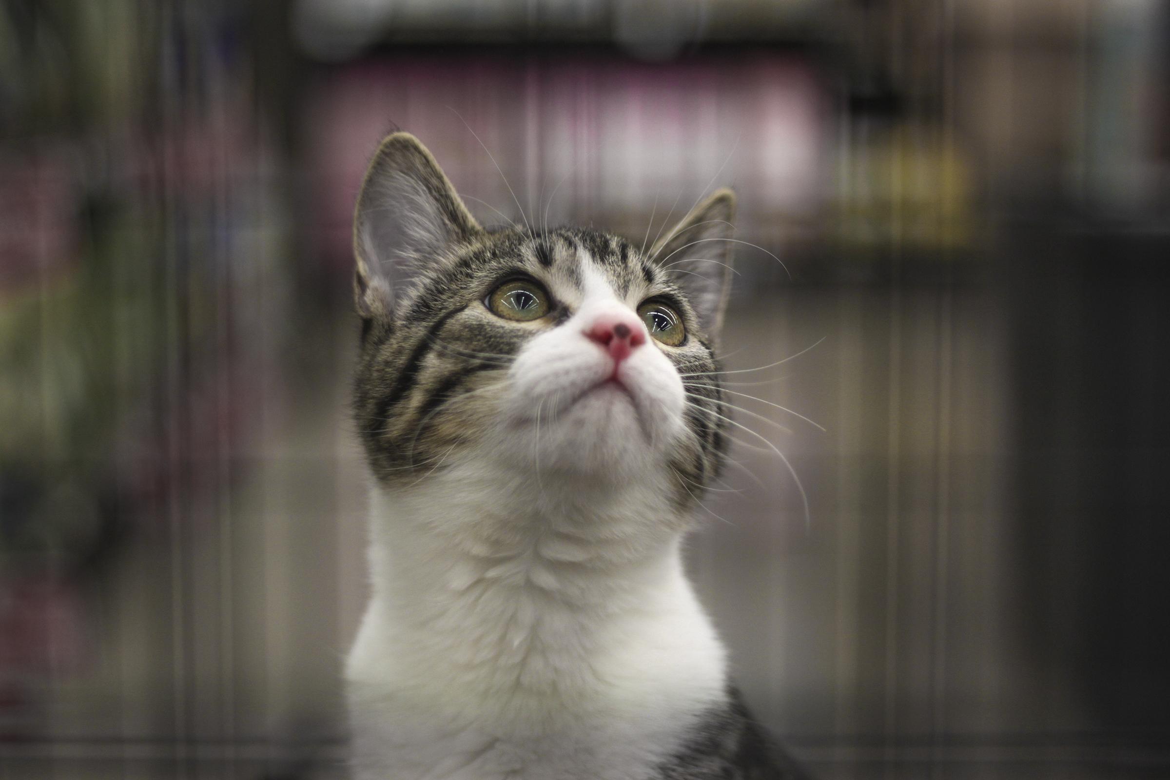 Wallpaper : animals, brown, baby, USA, whiskers, Arizona, Facebook ...