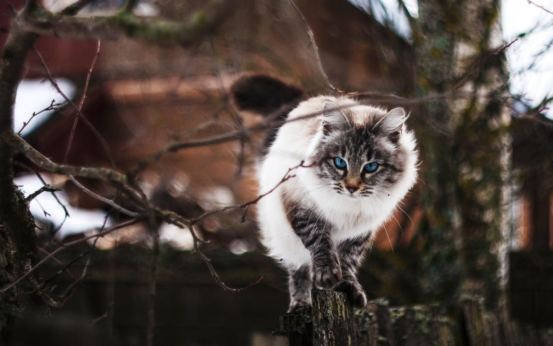 velké ptáky a velké kočičkyty pirne