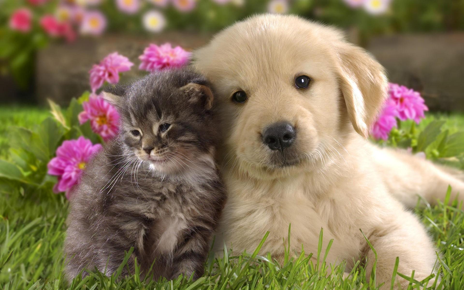 wdognet is your best friend in HD wallpapers searching