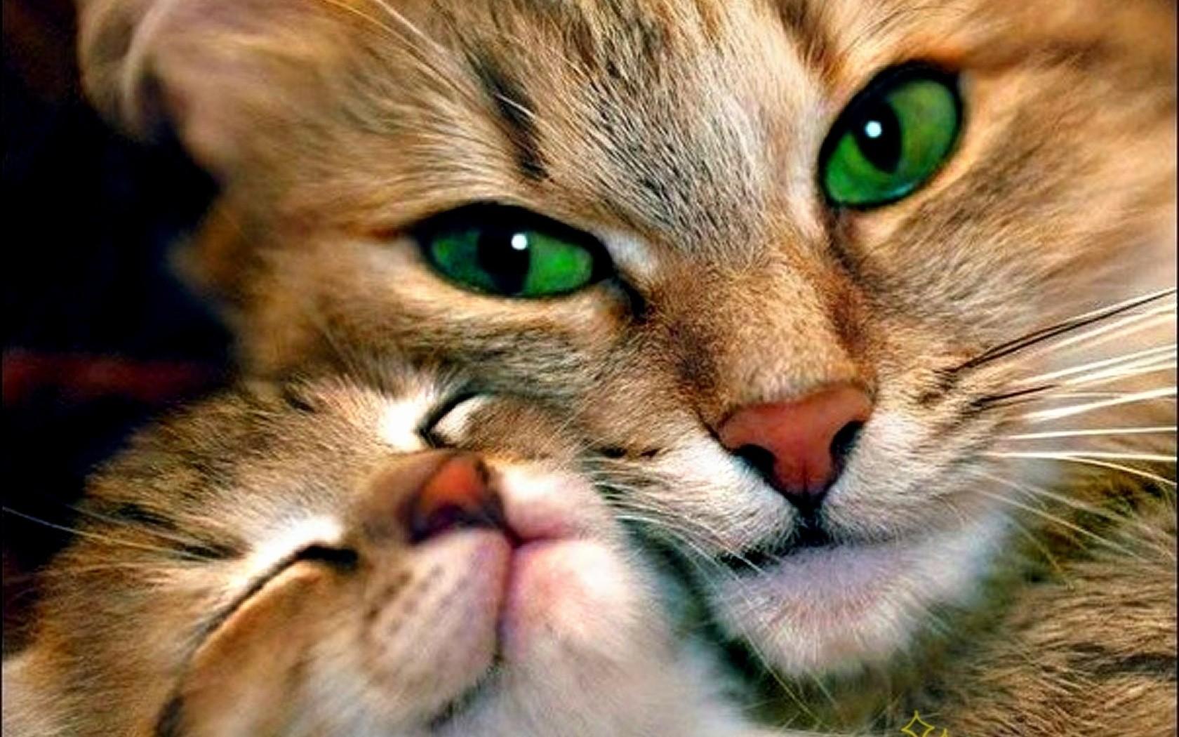 80 Wallpaper Gambar Hewan Kucing Terbaik