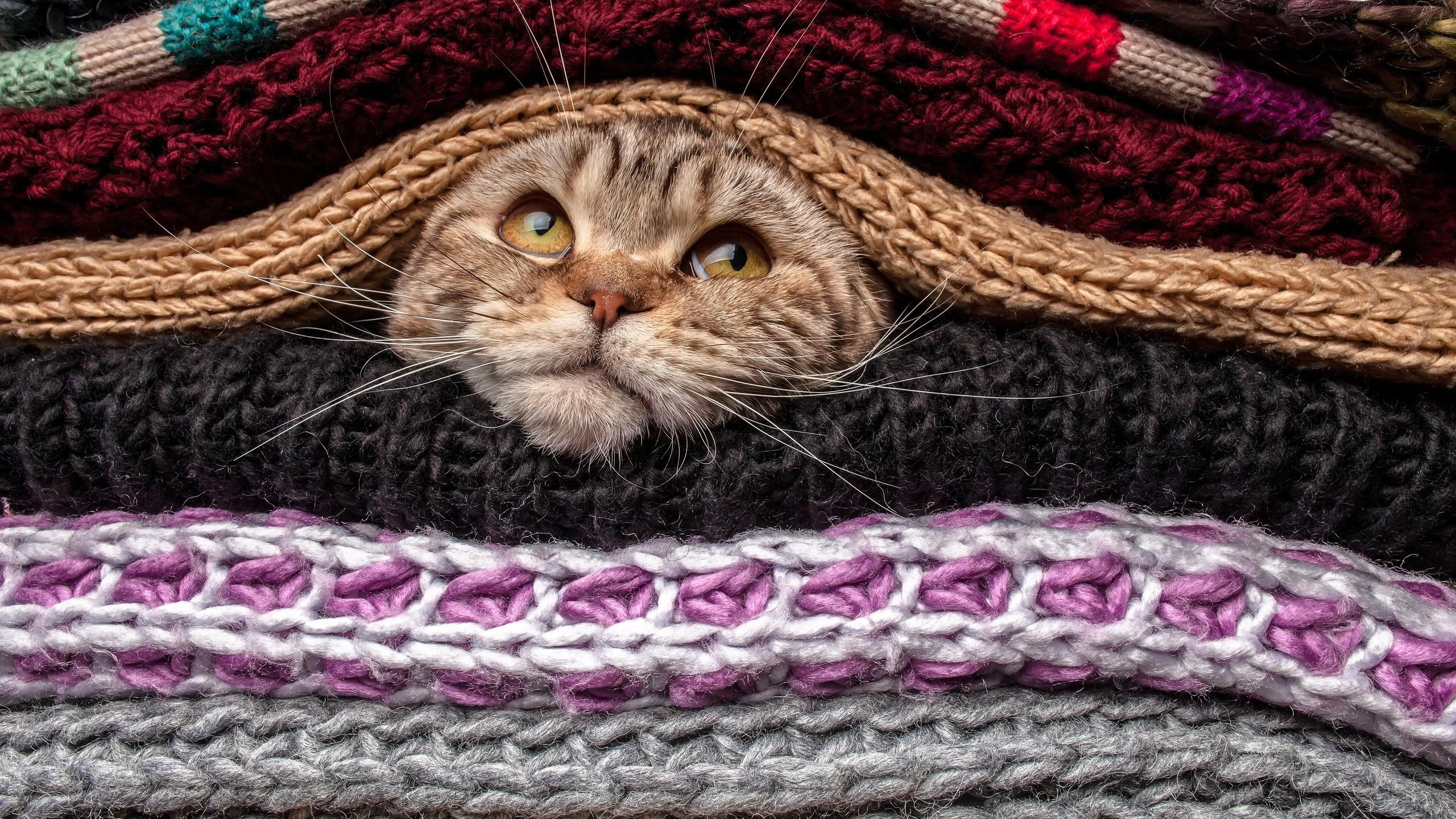 Hintergrundbilder Tiere Sweatshirt Wolle Haustier Kopf Häkeln