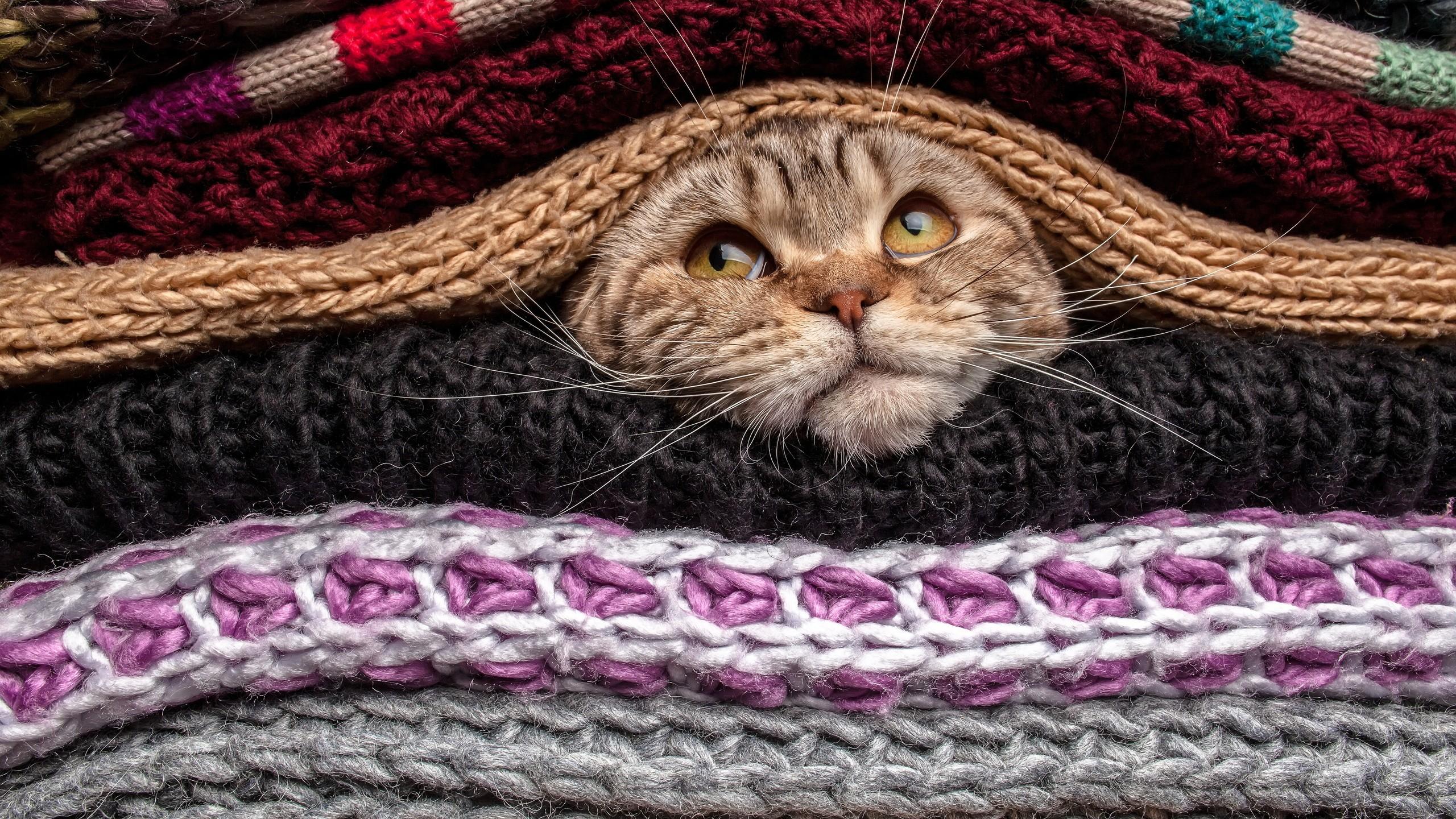 Bien-aimé Fond d'écran : chat, animaux, chandail, la laine, animal de  YP91