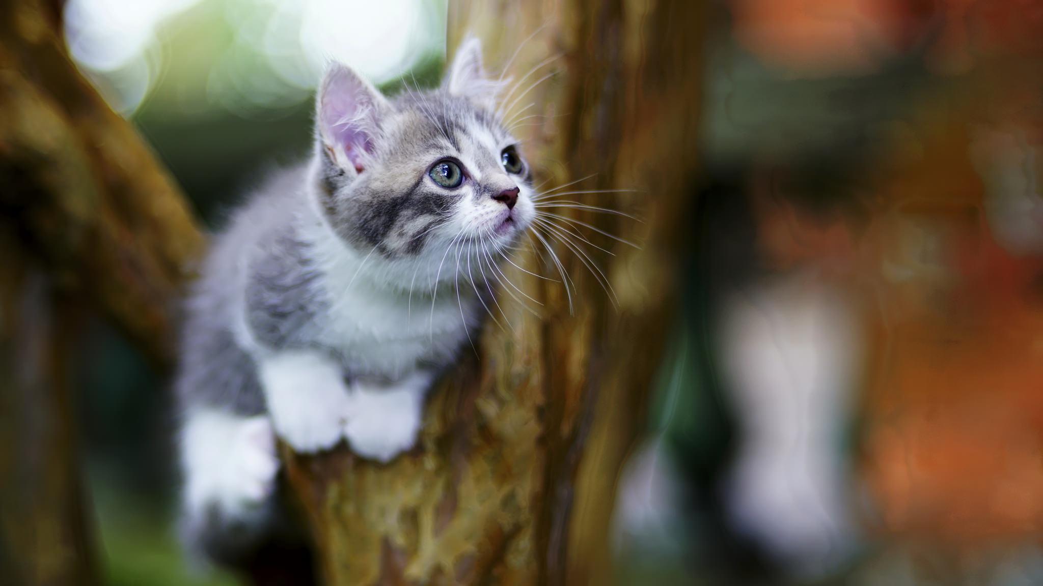 Fondos De Pantalla Gato Animales árboles 2048x1152