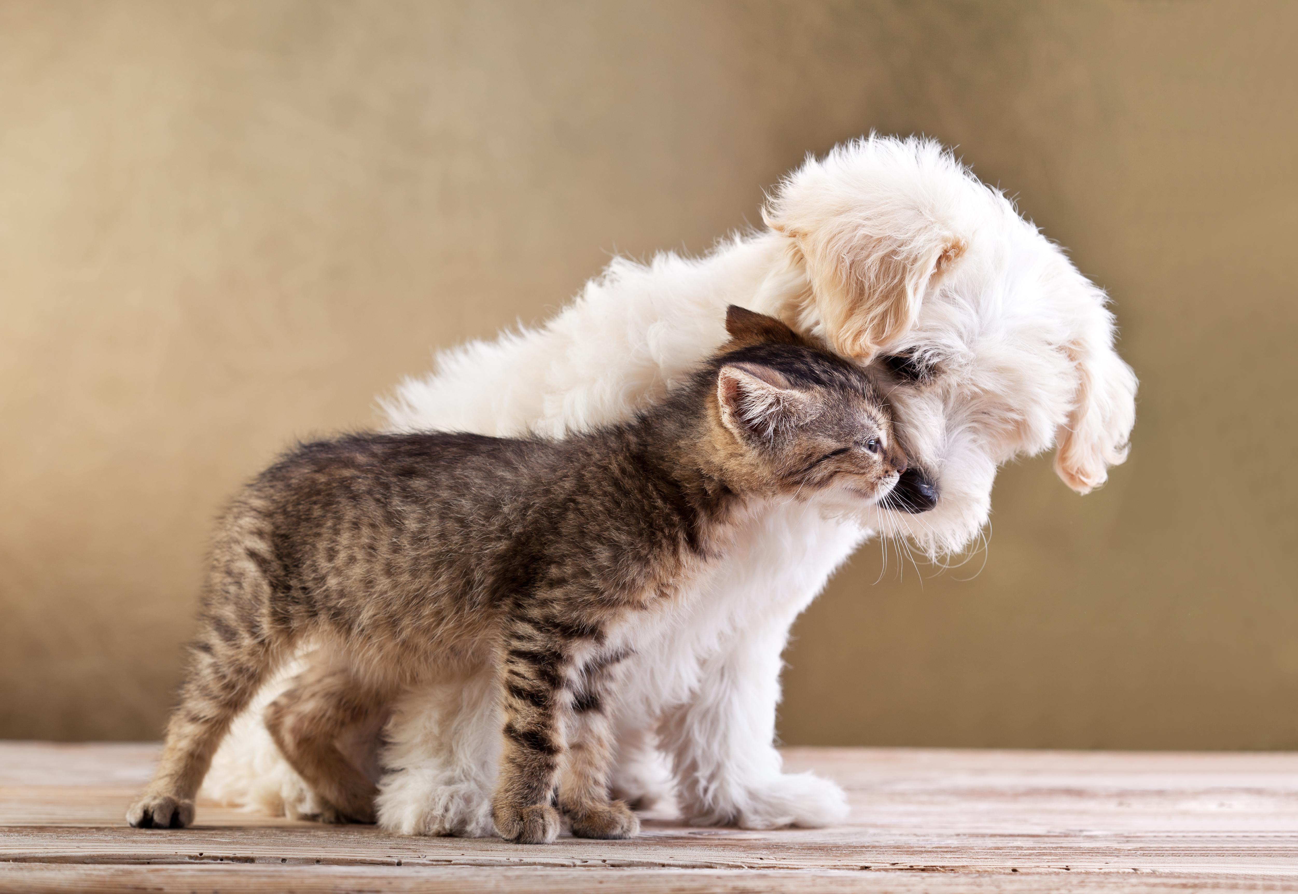 Wallpaper Animals Whiskers Friends Tenderness Puppy Kitten