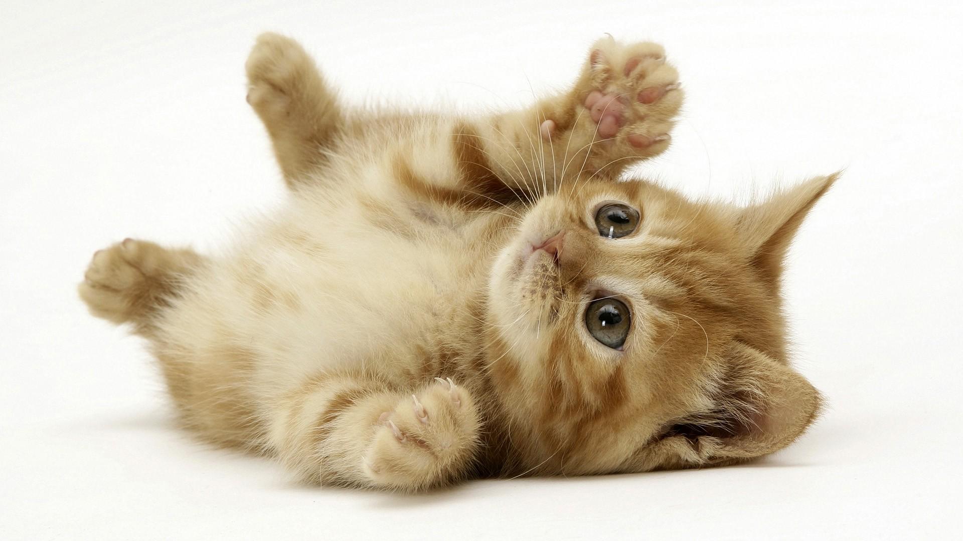 Fondos De Pantalla De Animales Bebes: Fondos De Pantalla : Gato, Animales, Fondo Blanco, Nariz